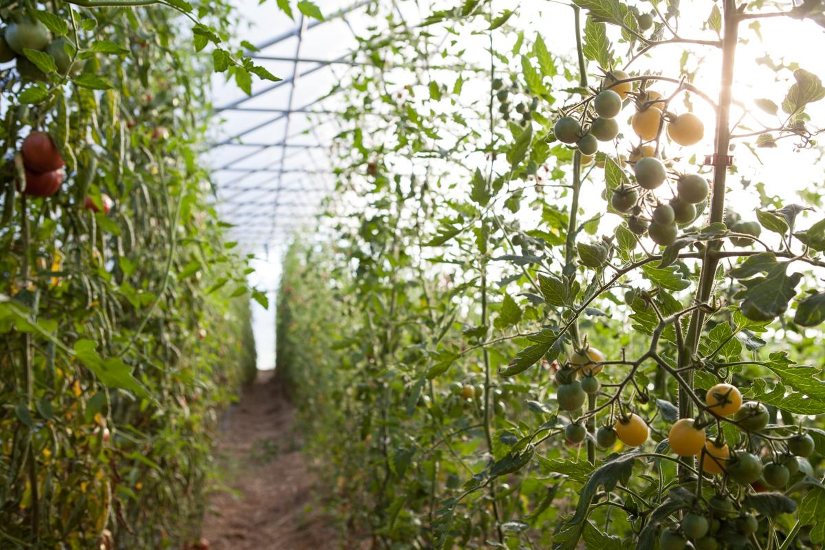 wingate_farm_produce_alyssa_robb_photography-9.jpg
