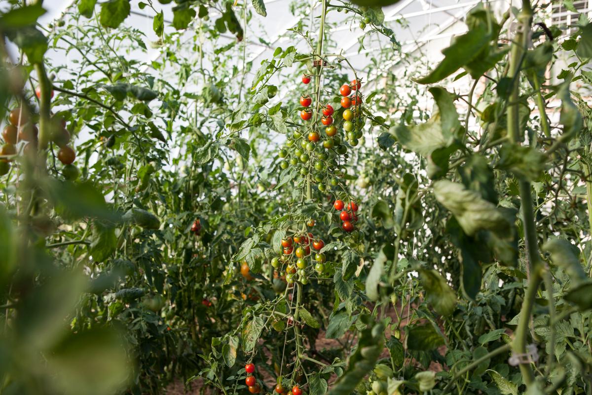 wingate_farm_produce_alyssa_robb_photography-10.jpg