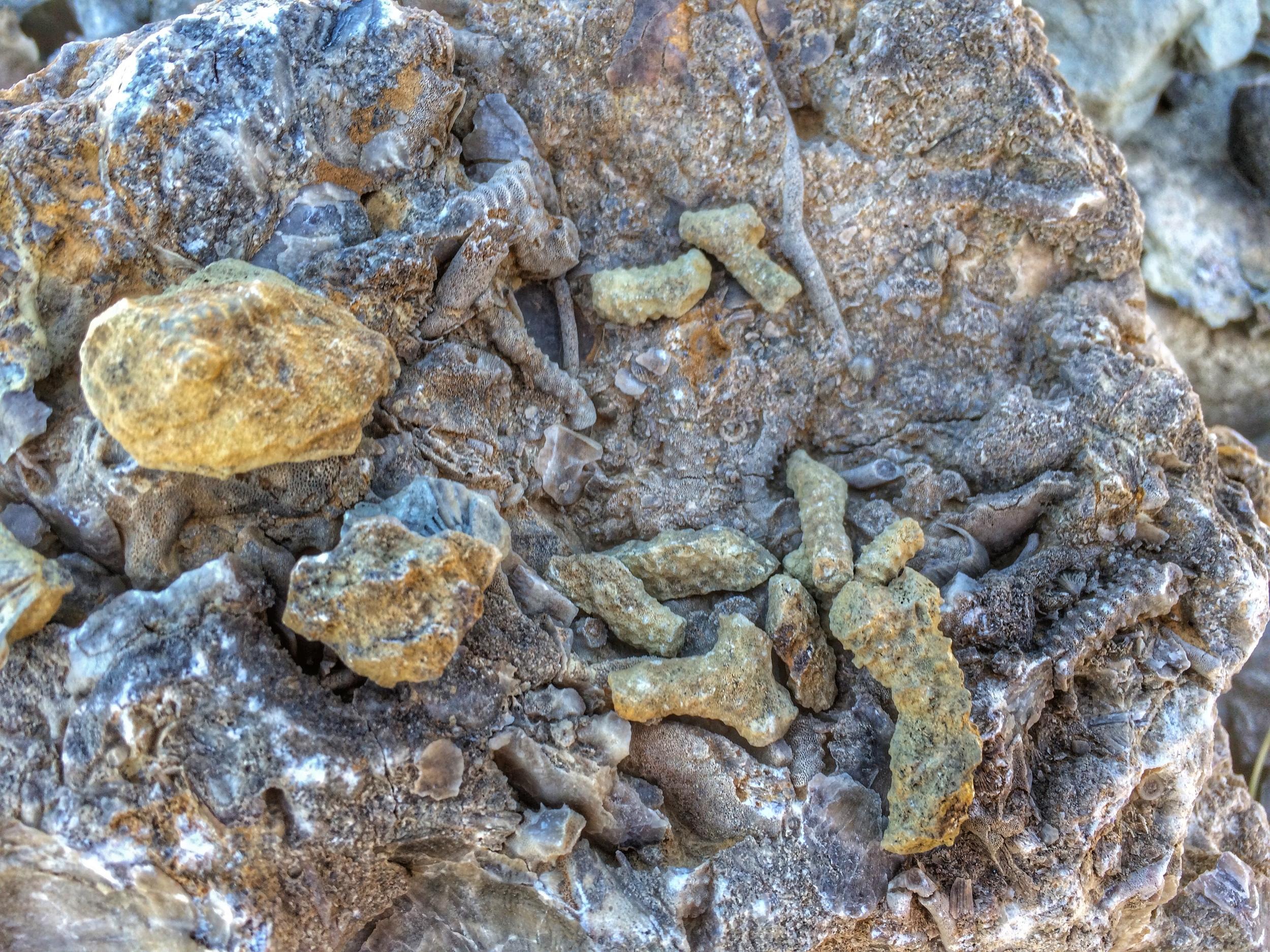 trammel fossil park fossils