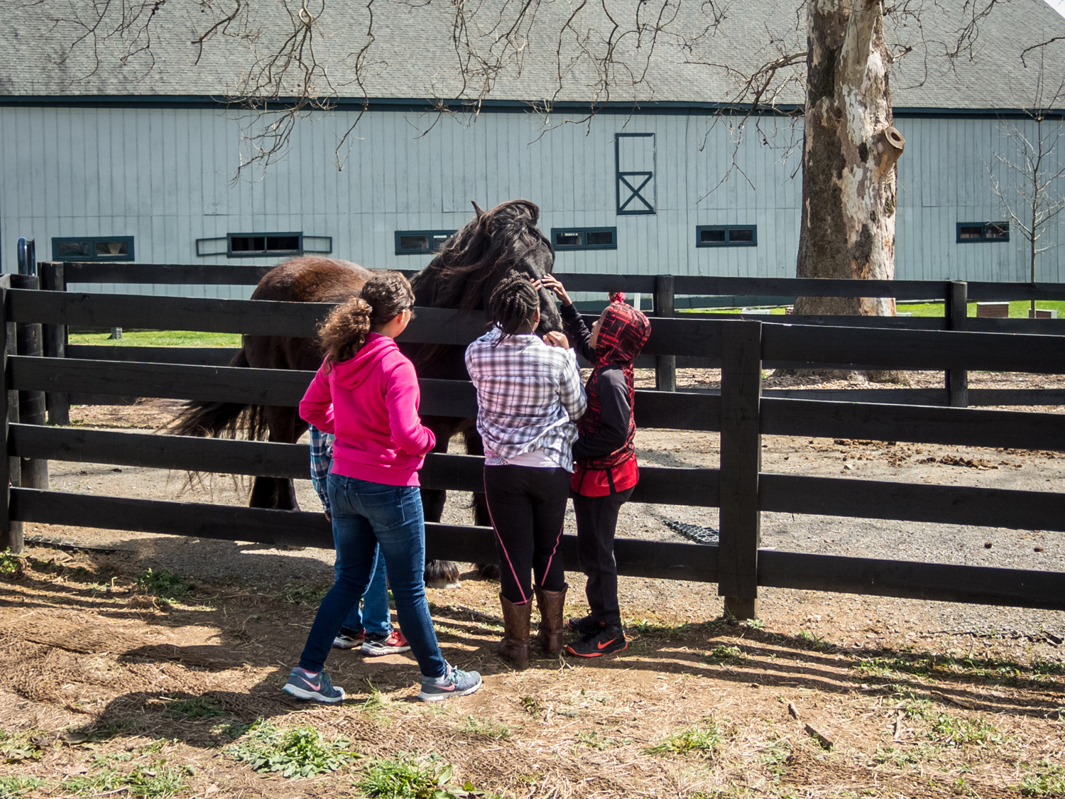 My kids getting up close and personal with one of the many accessible horses. They got 'kisses' from this one!