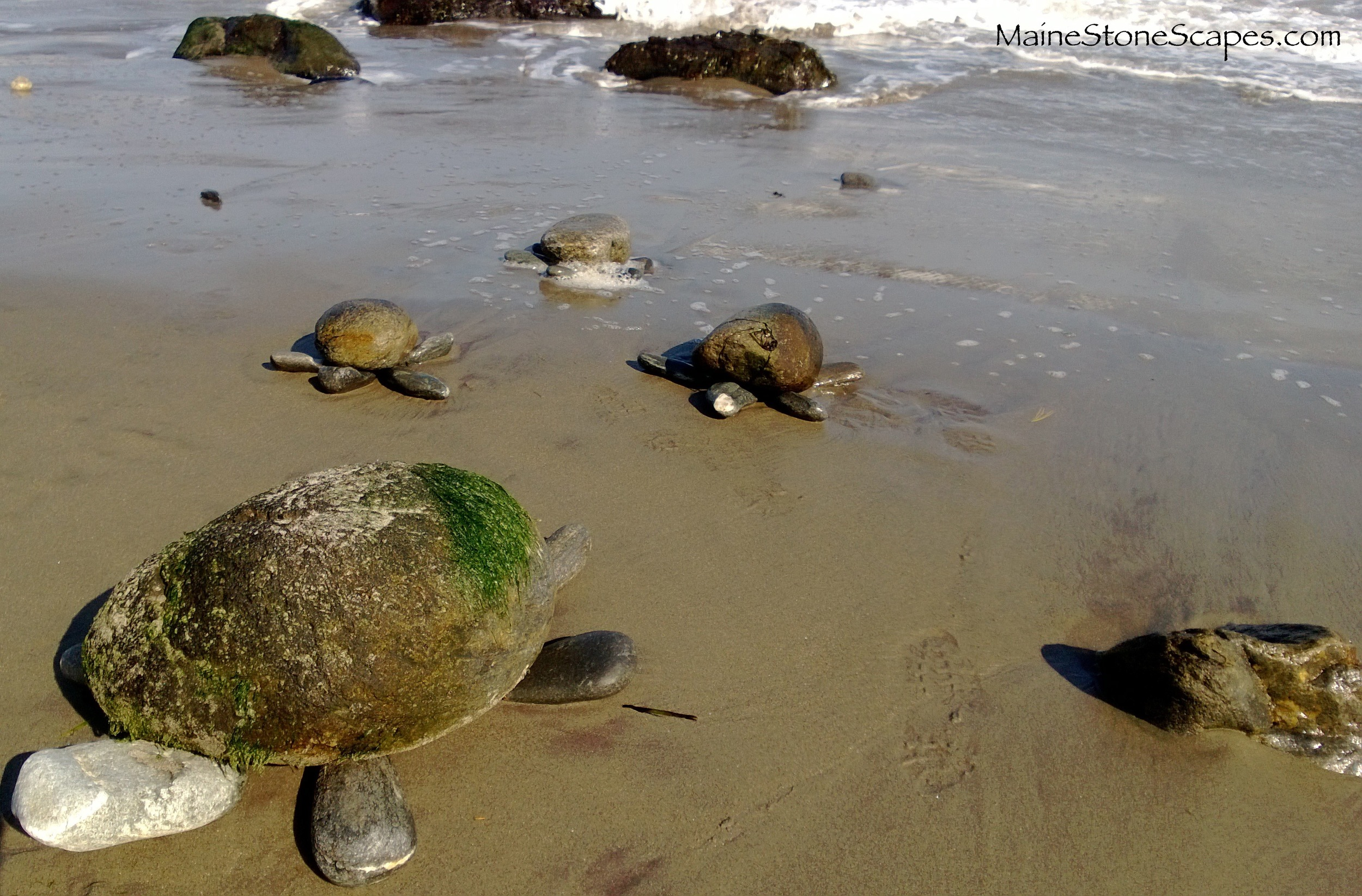 Stone turtles          Cape Elizabeth,, Me. 2013