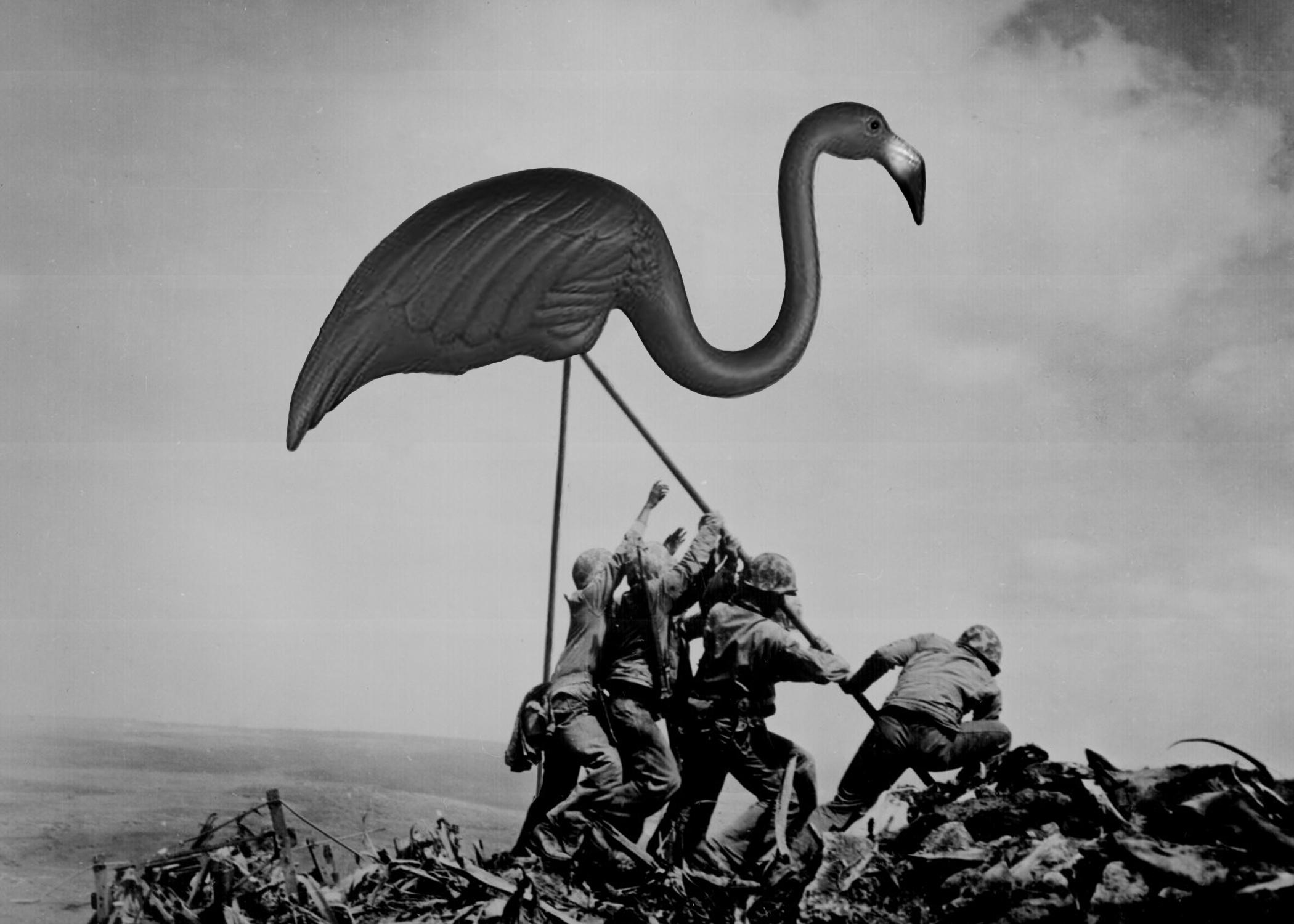 McDade_flamingo1.jpg