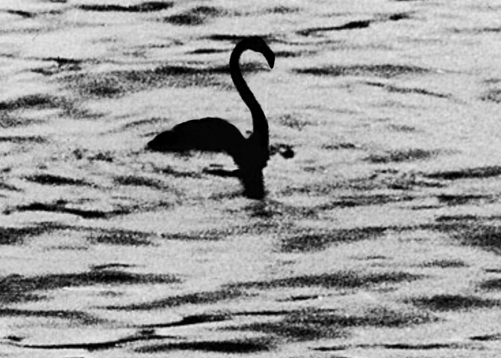 McDade_flamingo2.jpg