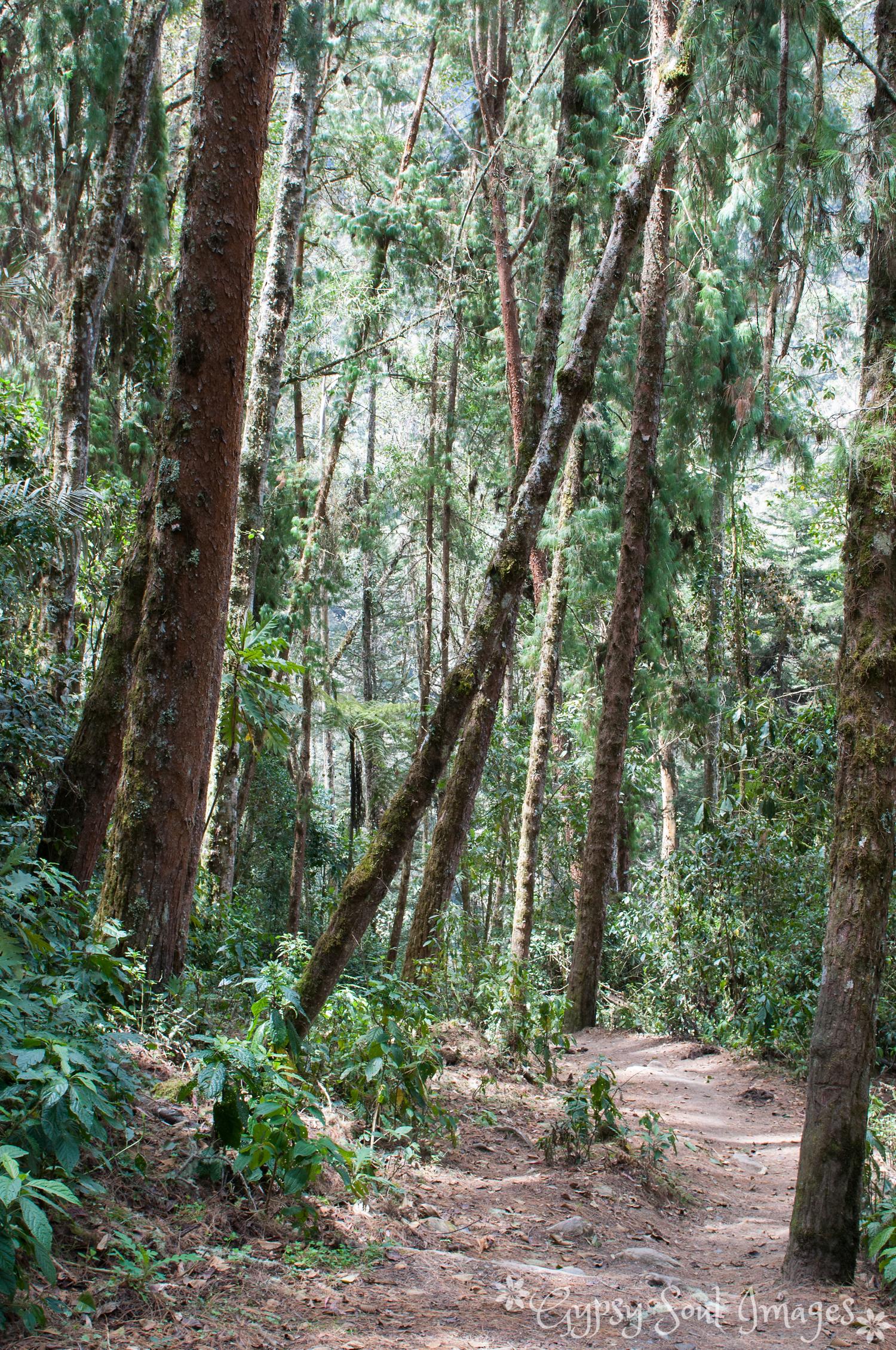Valle de Cocora 008.jpg