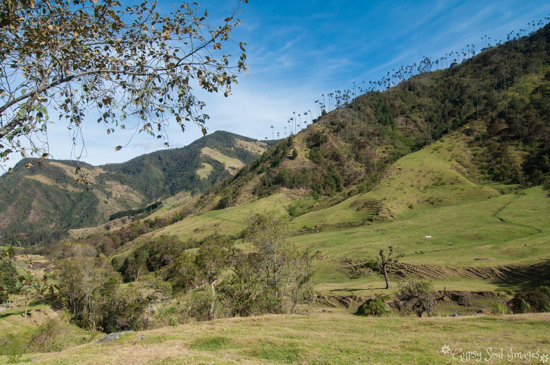 Valle de Cocora 003.jpg