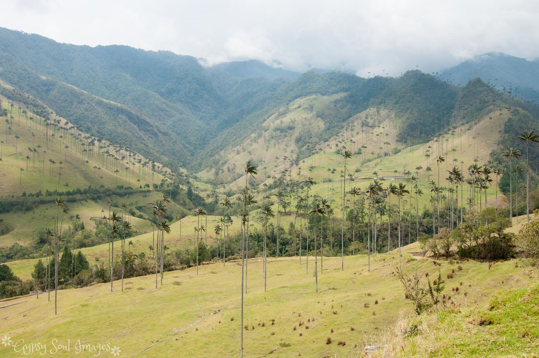 Valle de Cocora 018.jpg