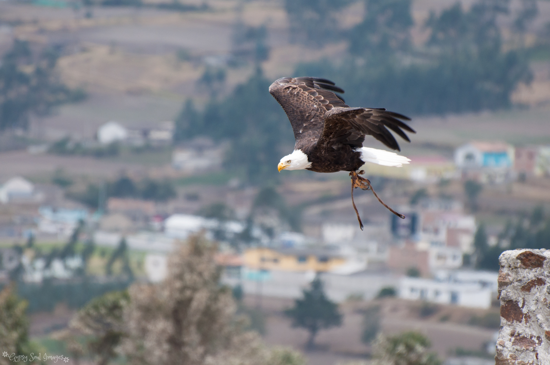 Otavalo 011.jpg