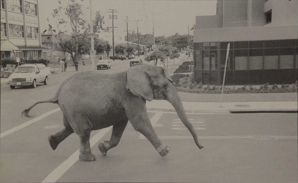Tyke Killer Elephant, courtesy Portland Film Festival.jpg