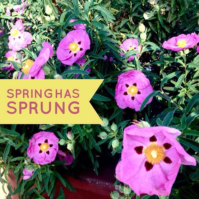 It is certainly Spring here in Southern California. How about where you live? What's your favorite part of #Spring?