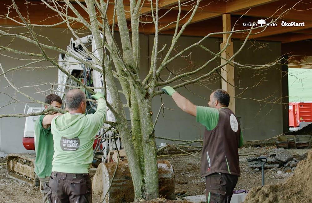 unsere-projekte-gruene-erde-welt-almtal-oekoplant-13.jpg