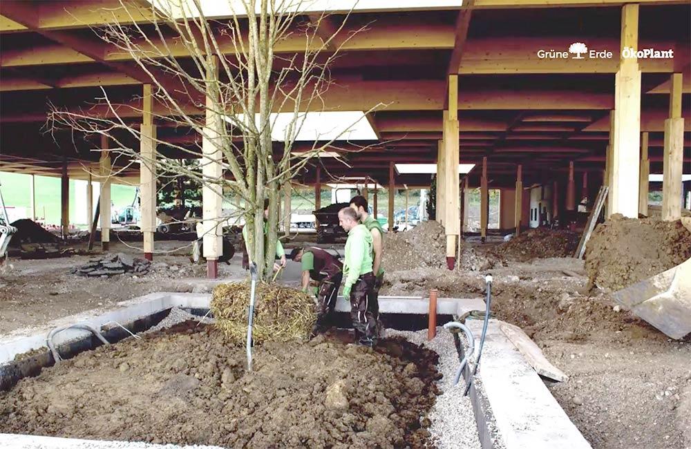 unsere-projekte-gruene-erde-welt-almtal-oekoplant-14.jpg