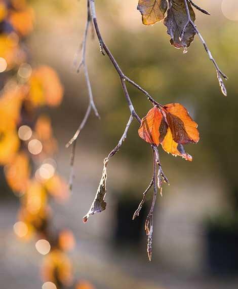 winteroeffnungszeiten-oekoplant-wels.jpg