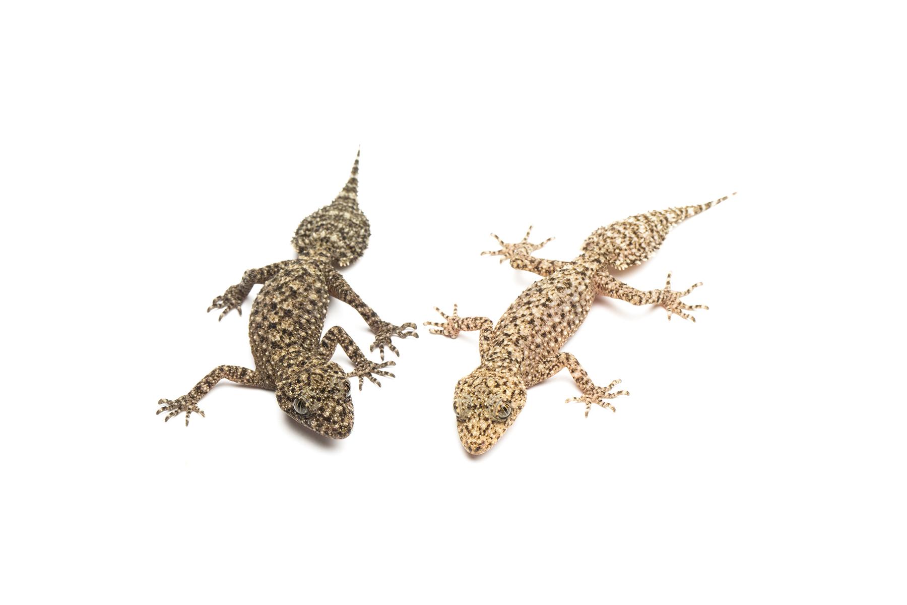 Hatchlings