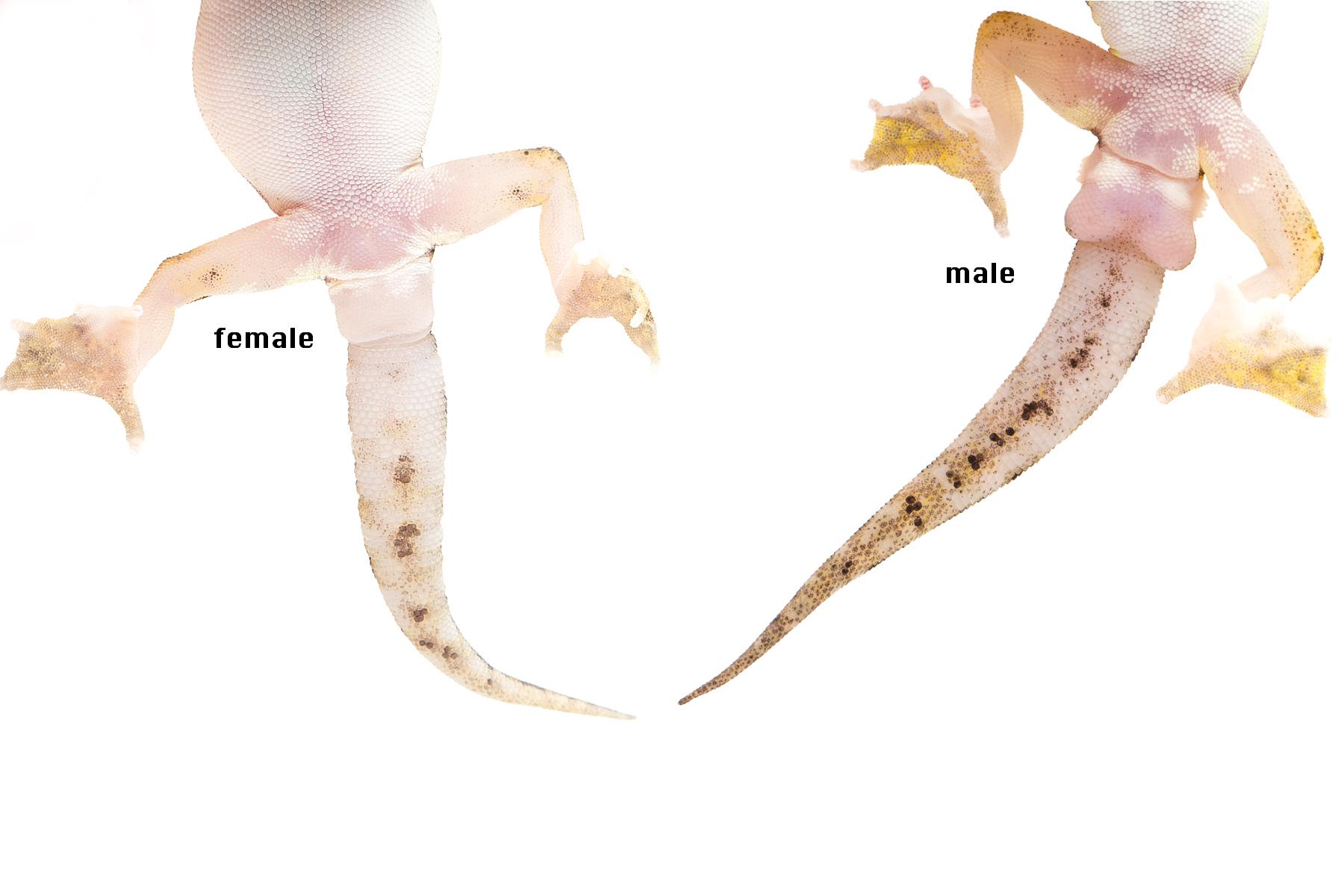 Female vs. male