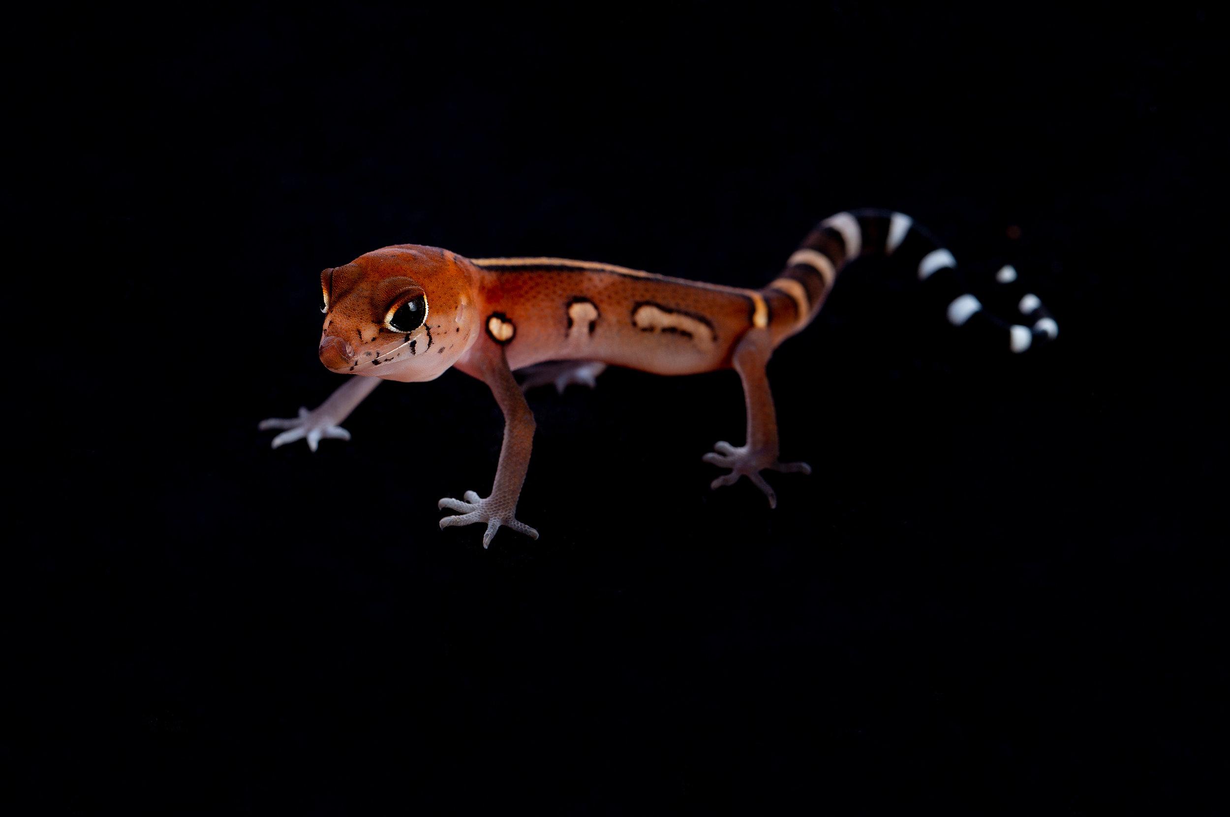 Hatchling C. elegans