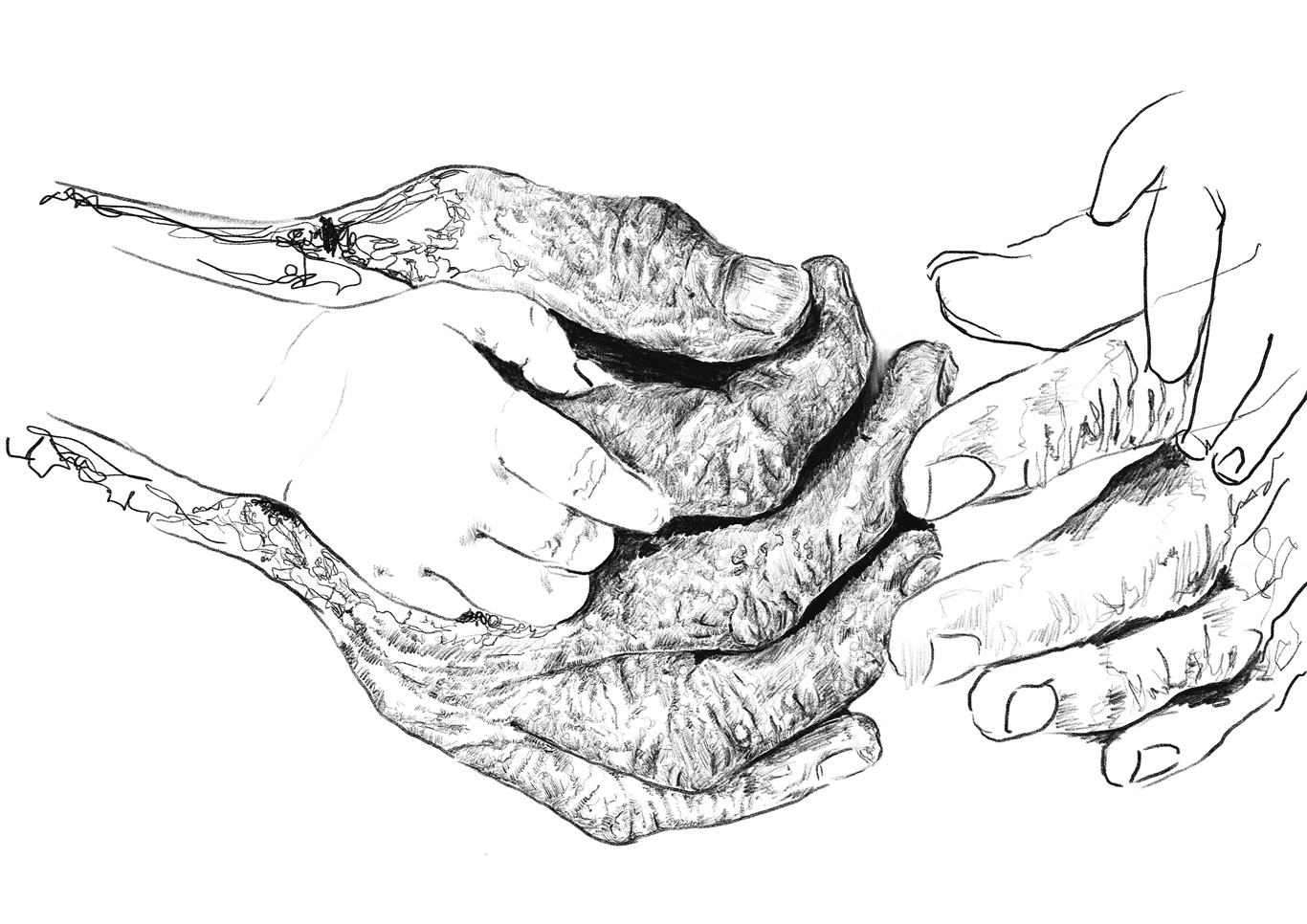 Hand-Study-1.jpg