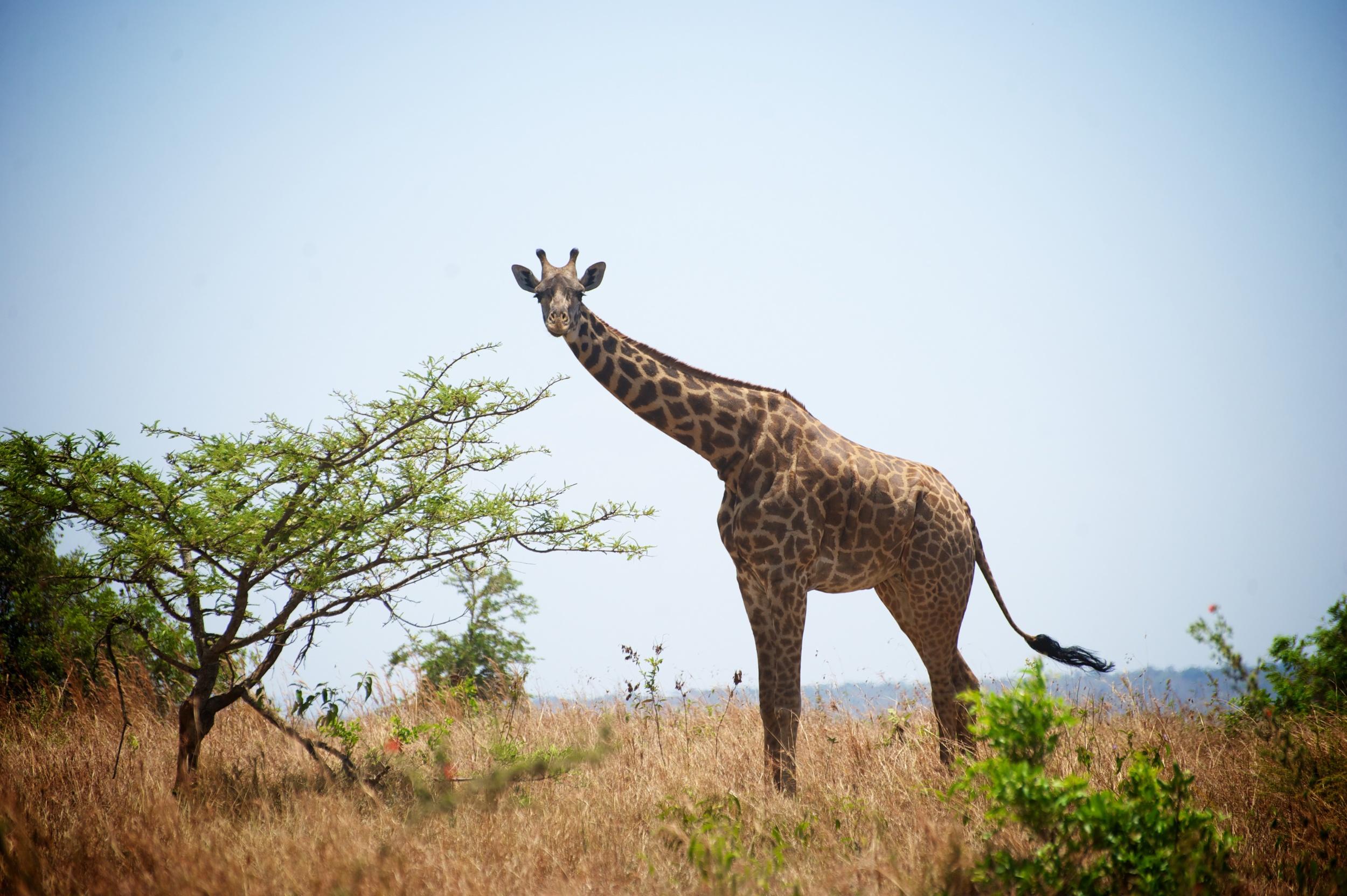 Rwanda Safari 310.jpg