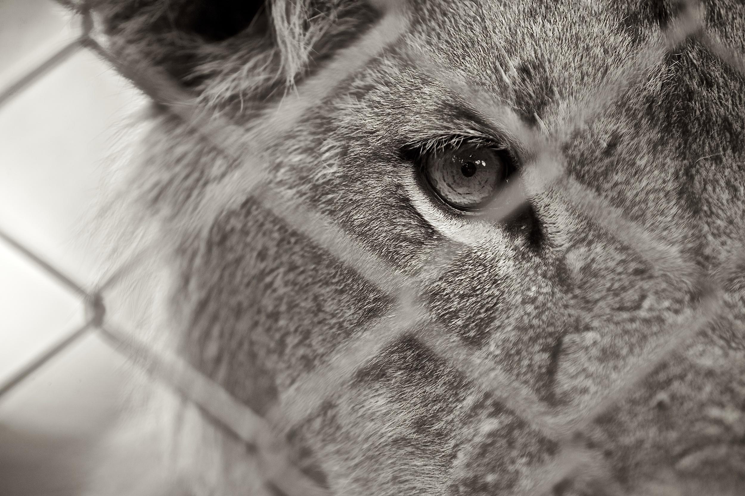 Animal Orphanage 55.jpg