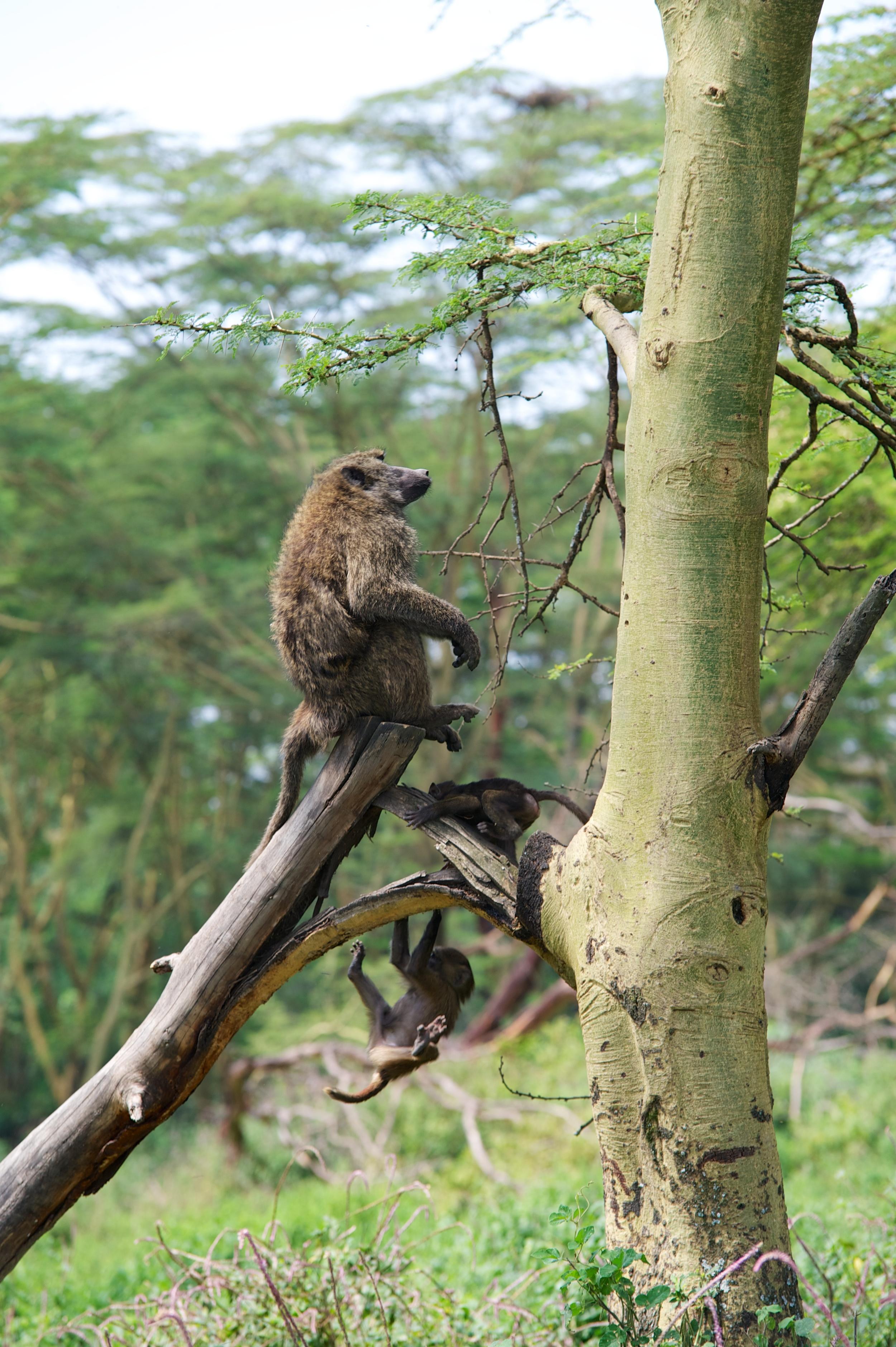 Kenya Safari 132.jpg