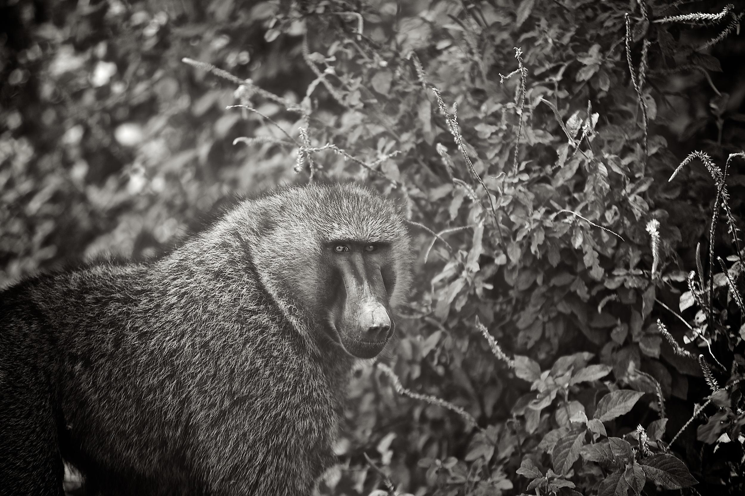 Kenya Safari 257.jpg
