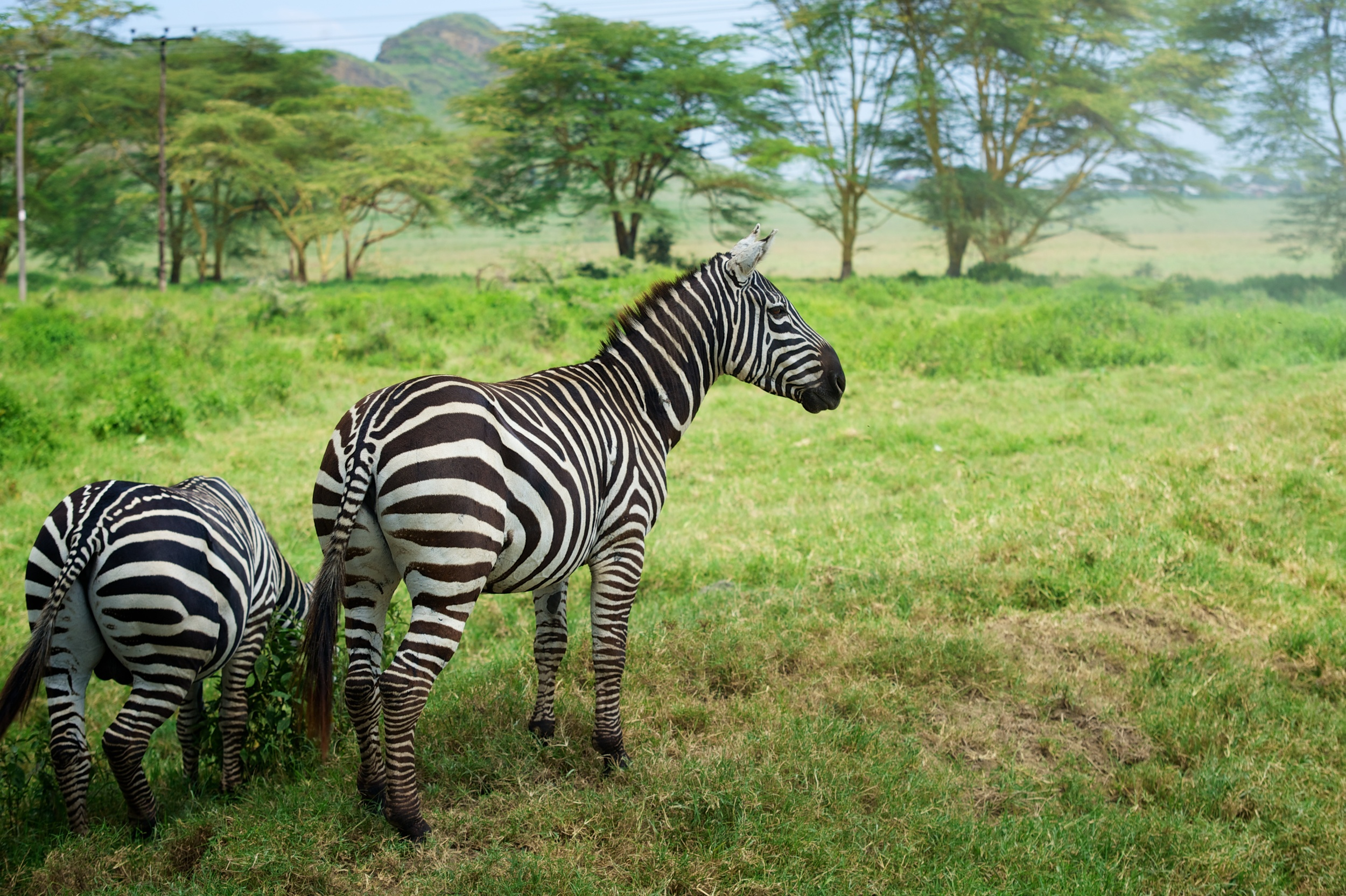 Kenya Safari 75.jpg
