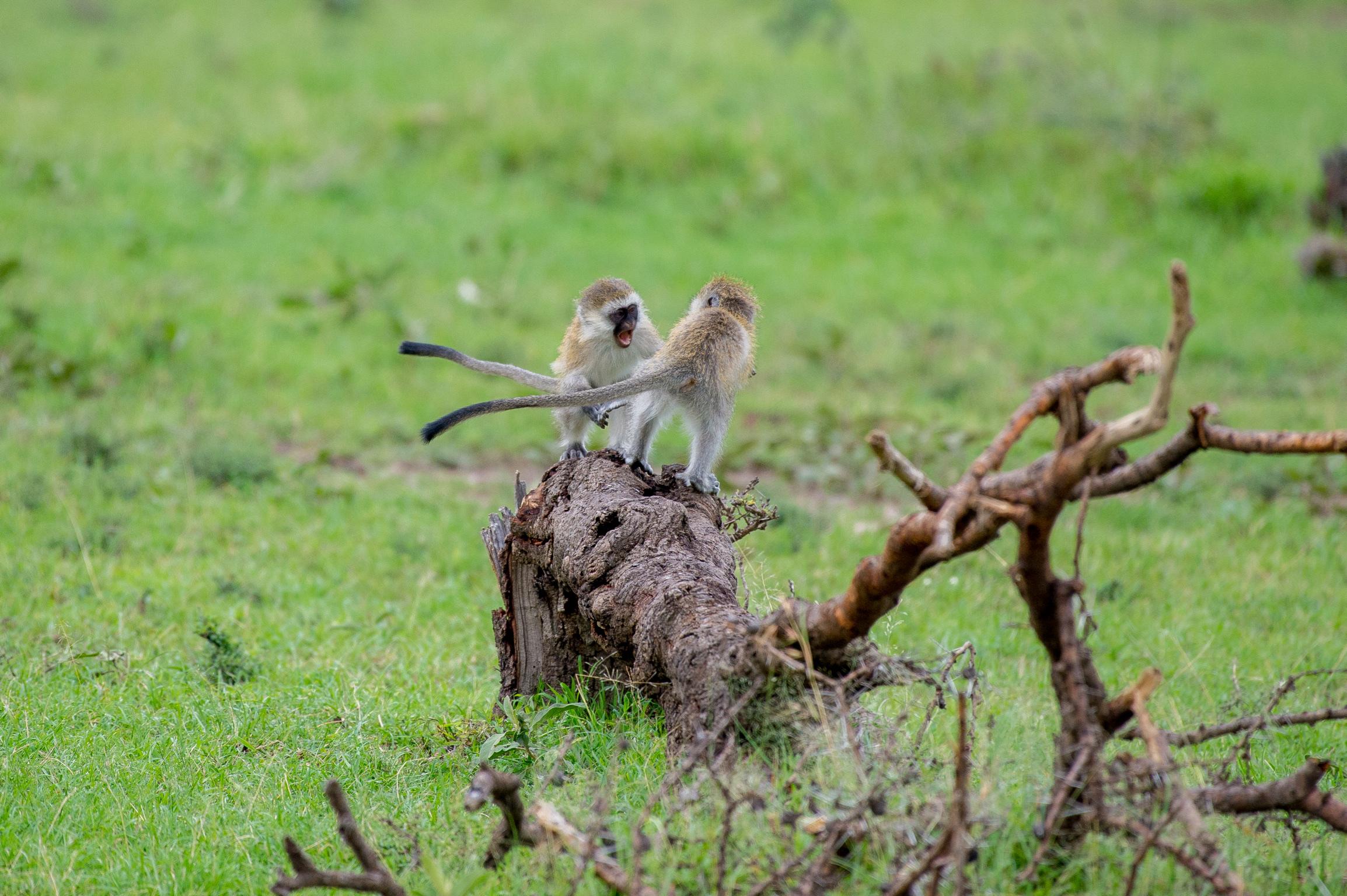 Kenya 2018 - Safari Day 3-67.jpg
