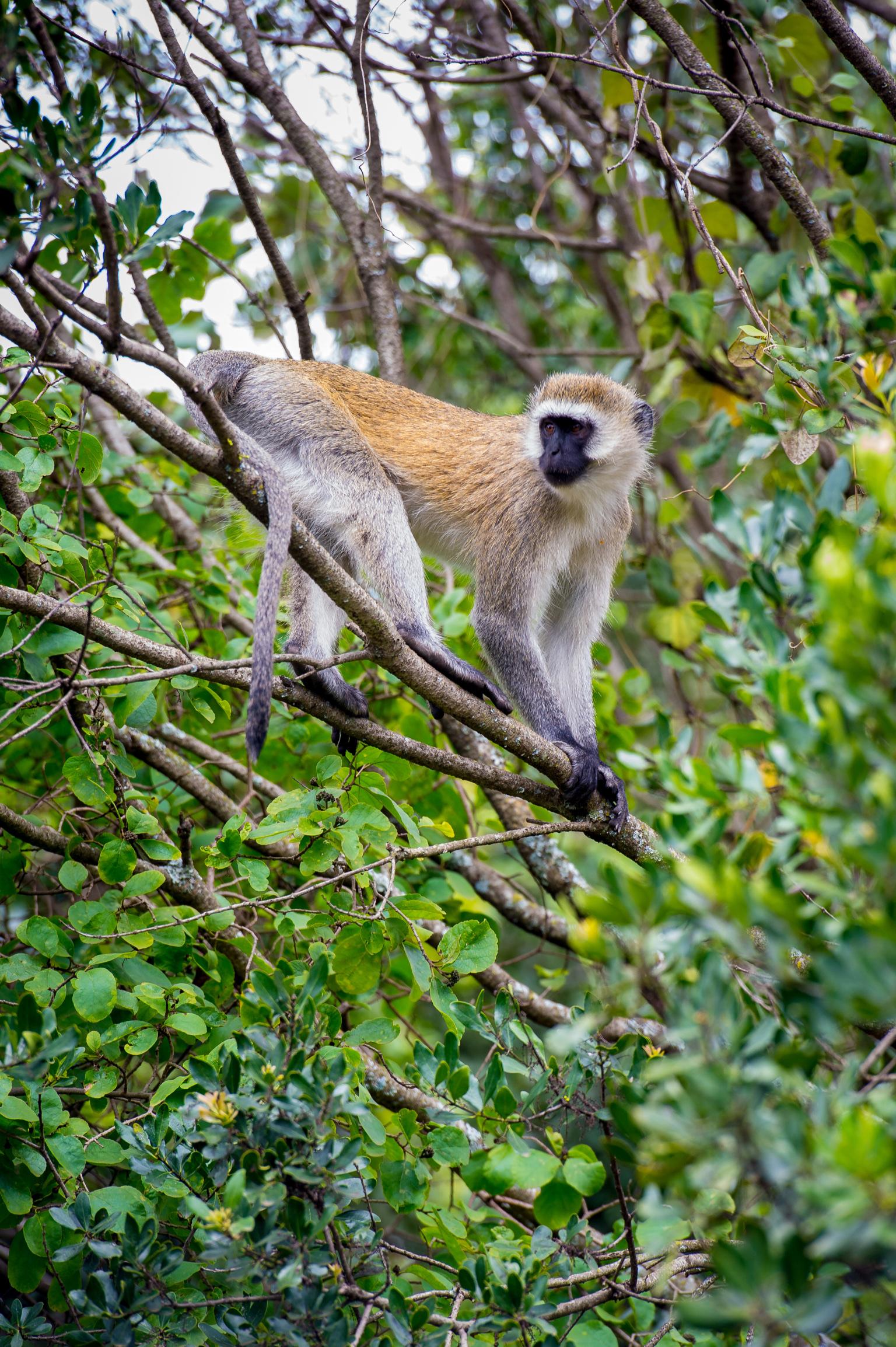 Kenya 2018 - Safari Day 3-51.jpg