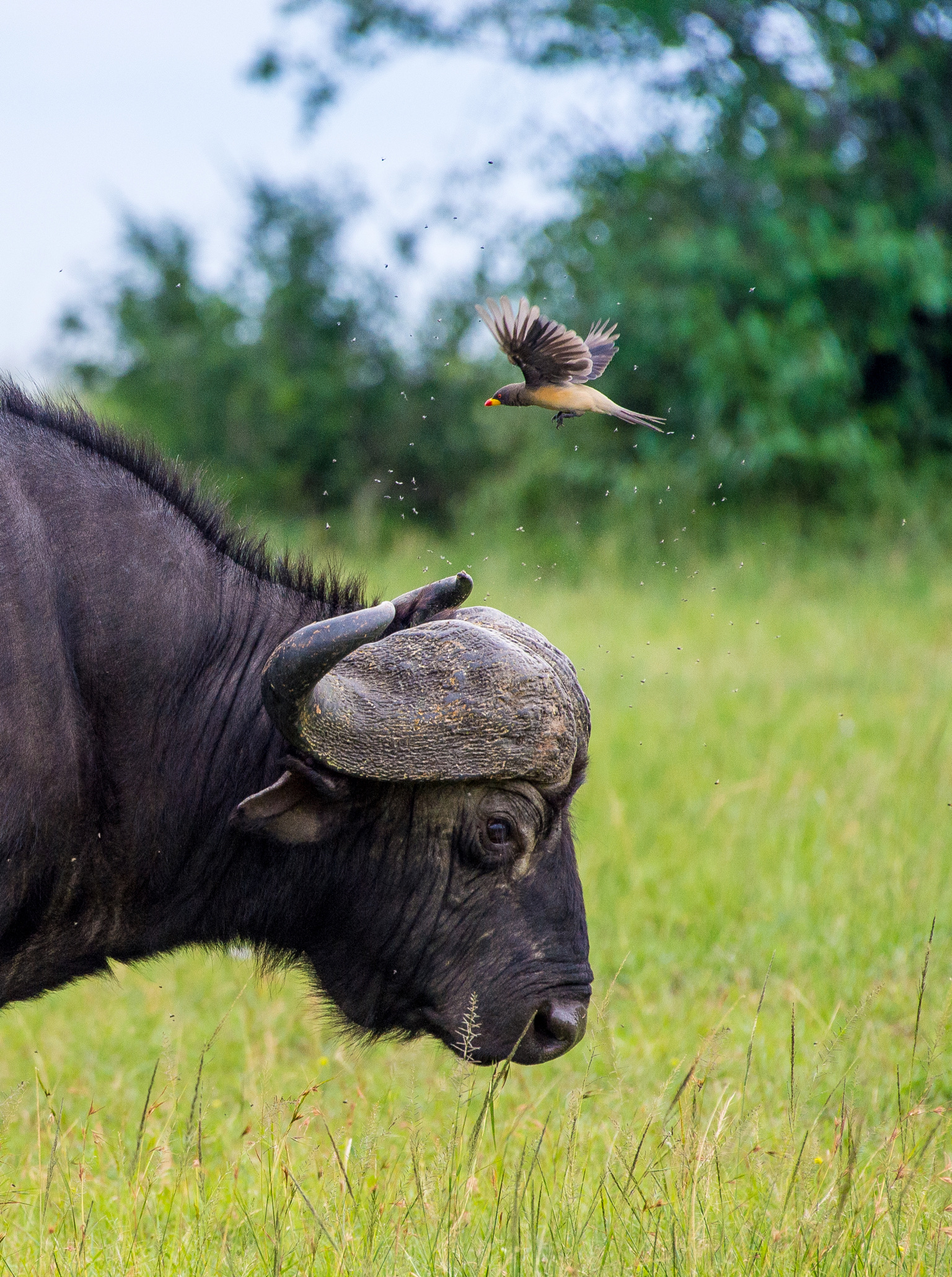 Kenya 2018 - Safari Day 3-99.jpg
