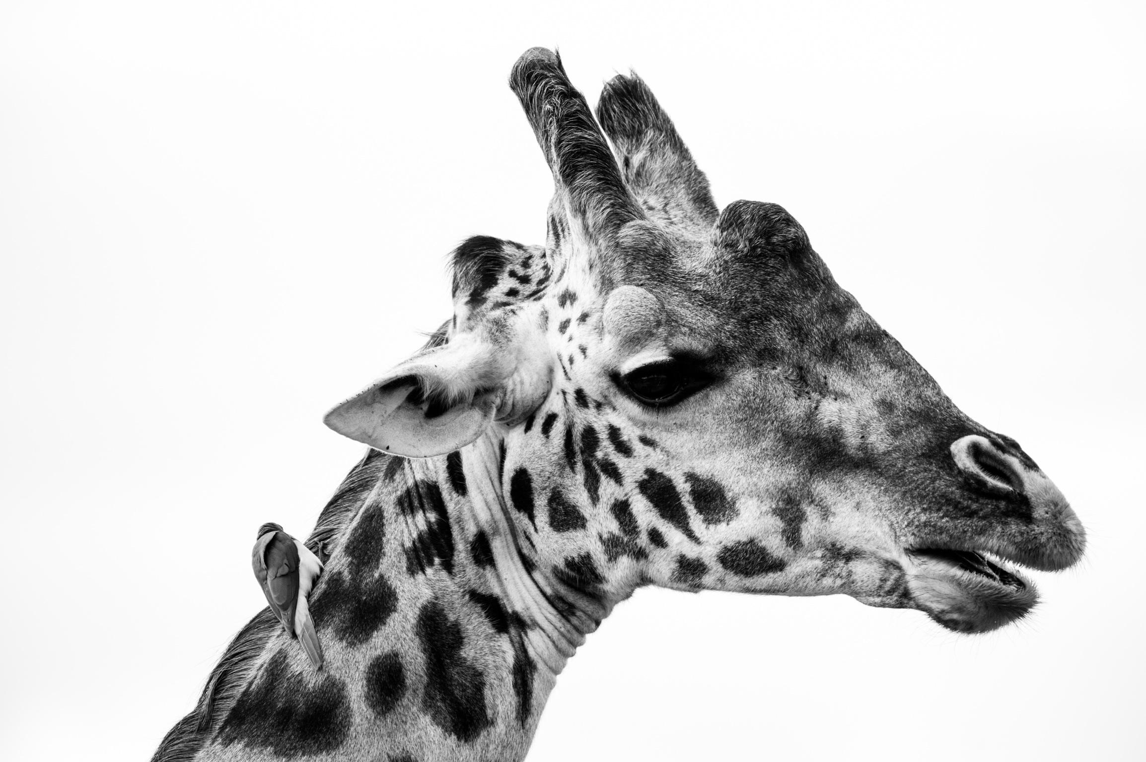 Kenya 2018 - Safari Day 3-128.jpg