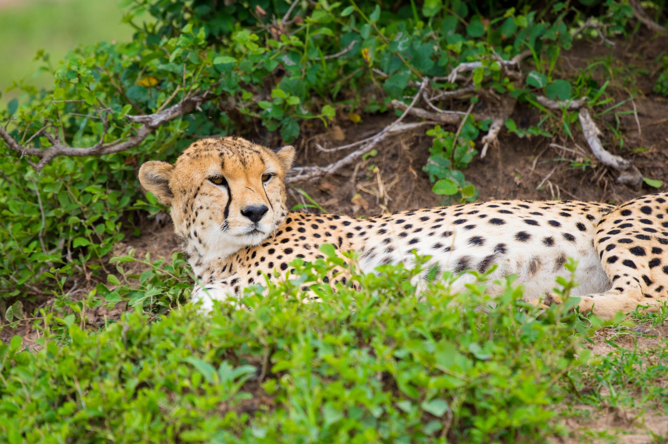 Kenya 2018 - Safari Day 3-111.jpg