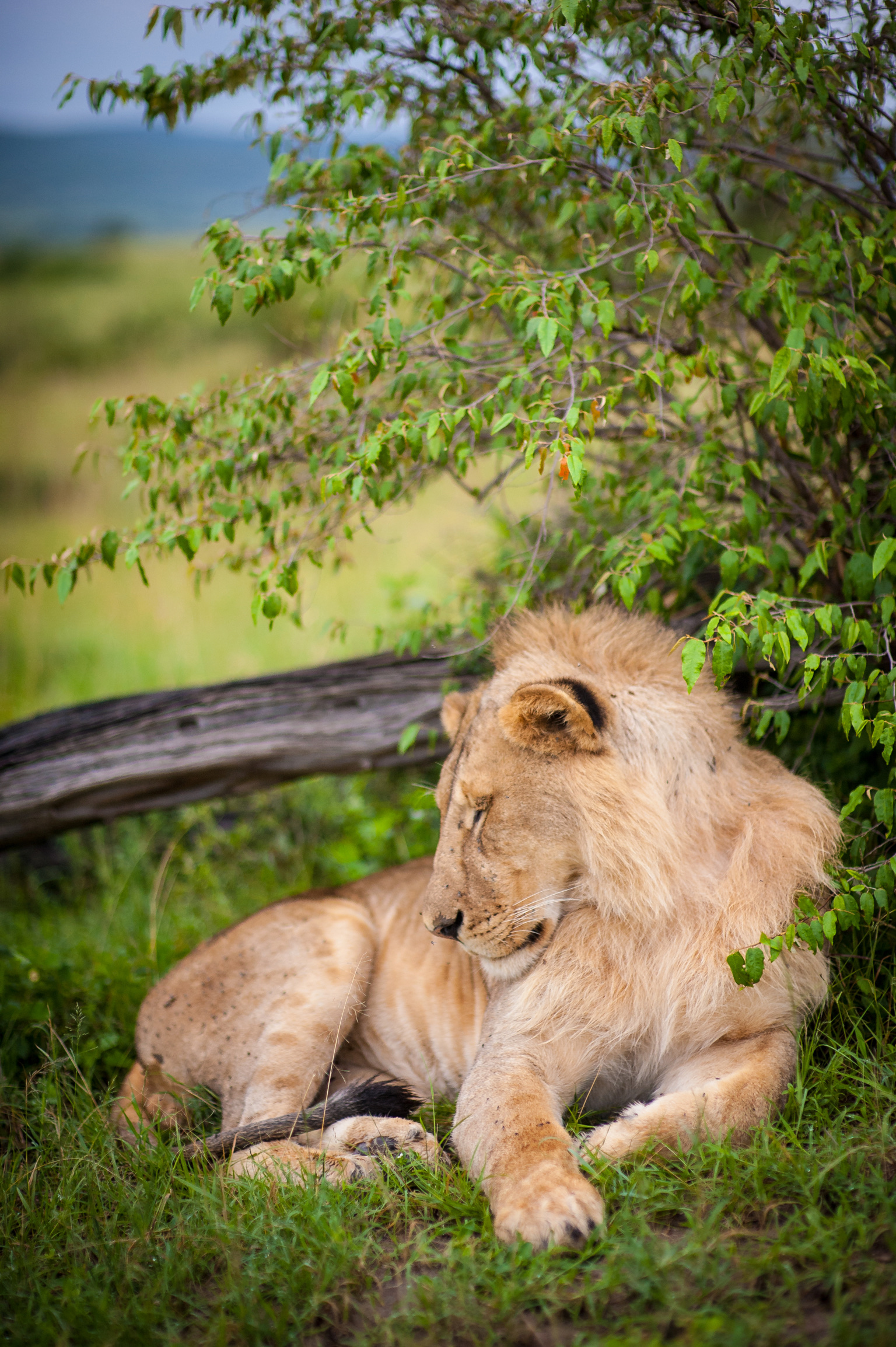 Kenya 2018 - Safari Day 4-51.jpg