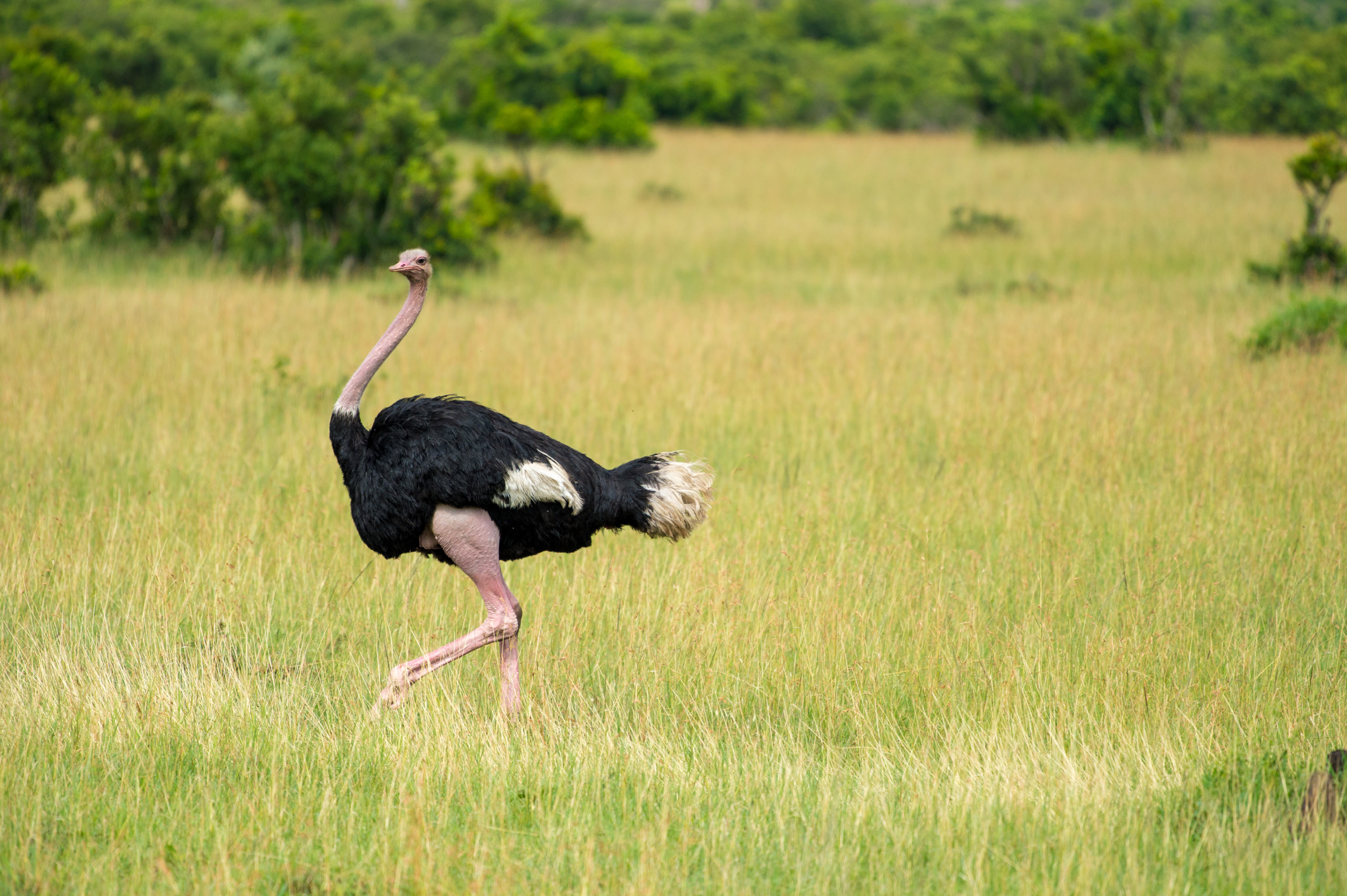 Kenya 2018 - Safari Day 4-67.jpg