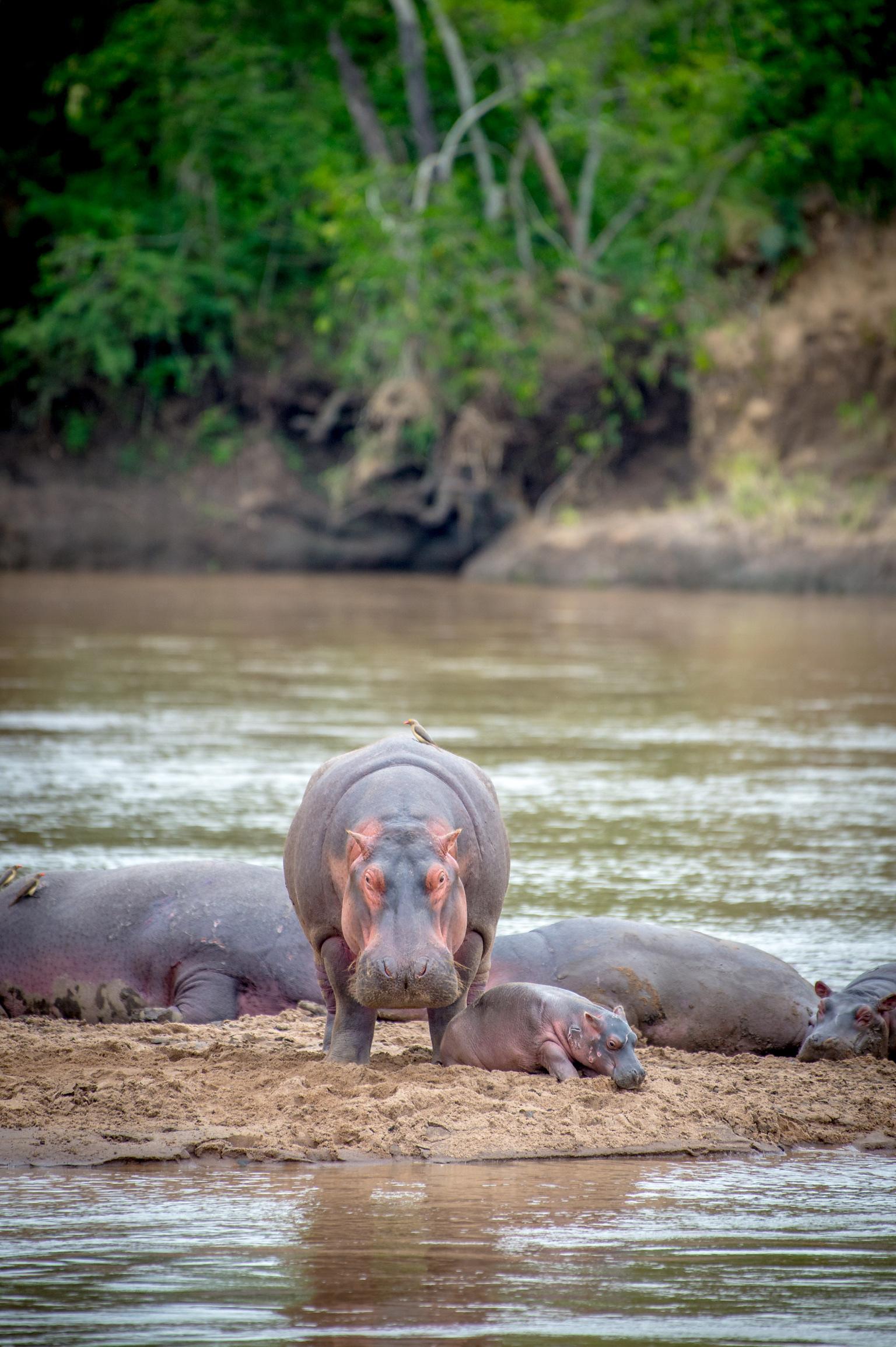 Kenya 2018 - Safari Day 4-108.jpg