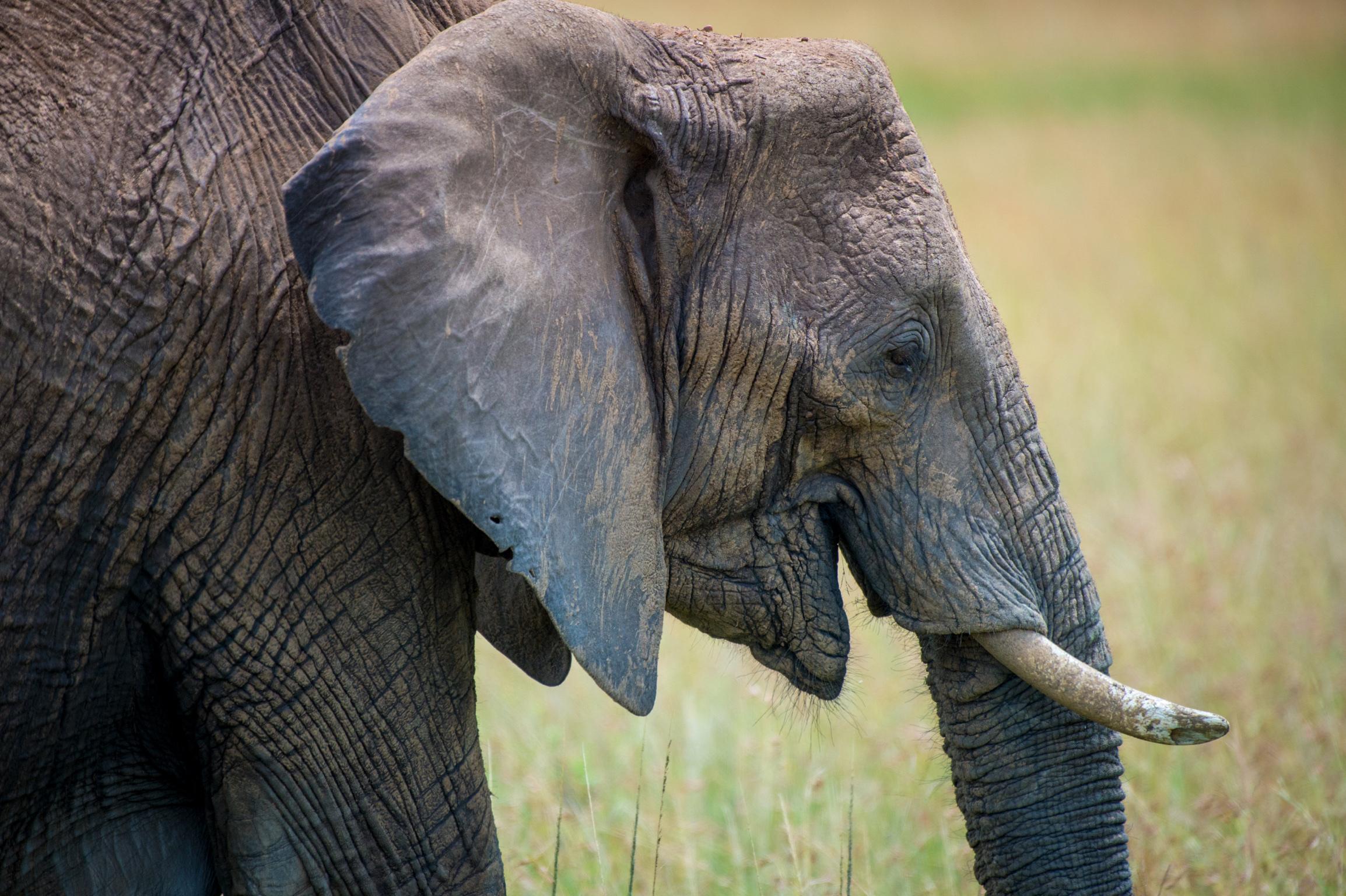 Kenya 2018 - Safari Day 4-153.jpg