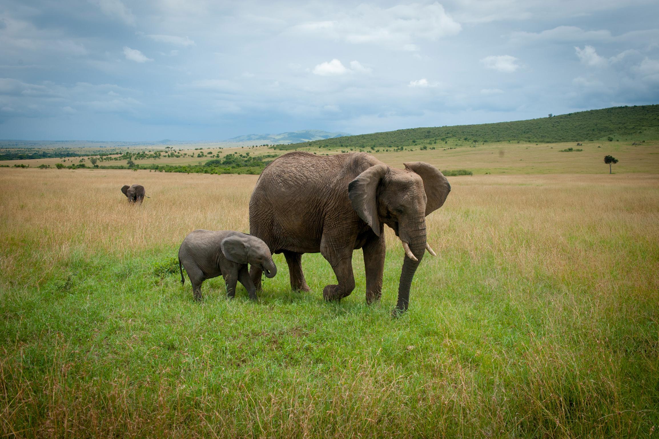 Kenya 2018 - Safari Day 4-156.jpg