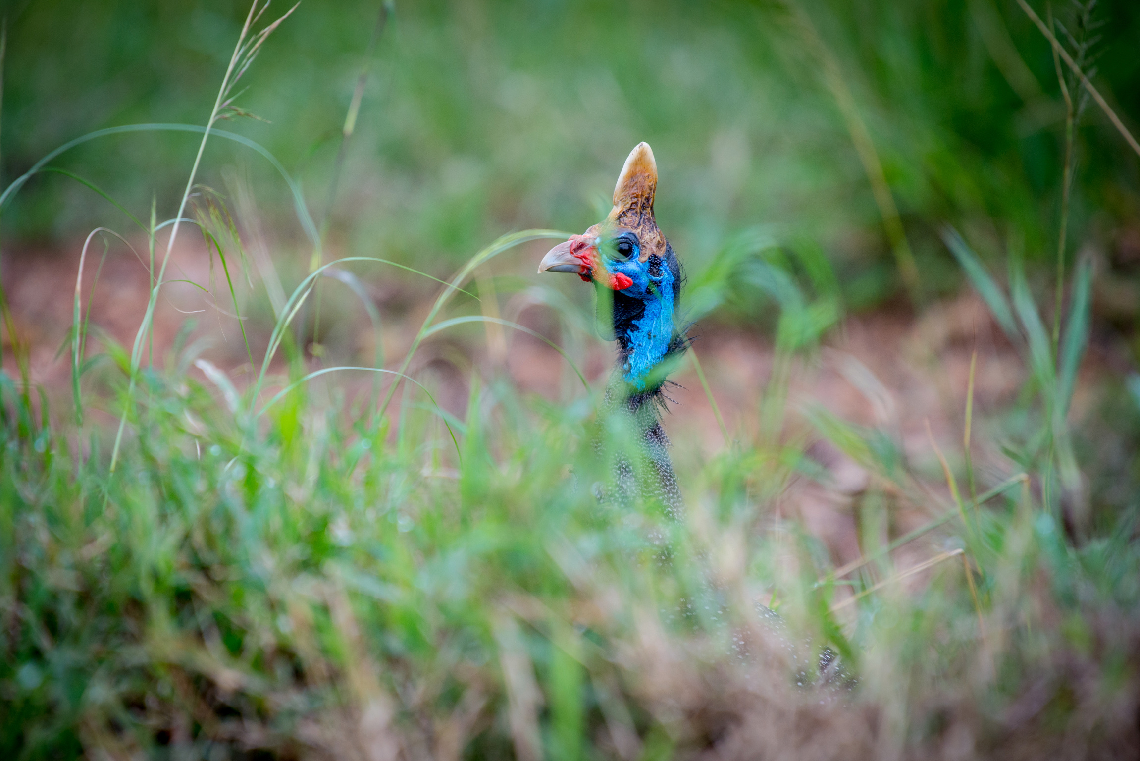 Kenya 2018 - Safari Day 4-85.jpg