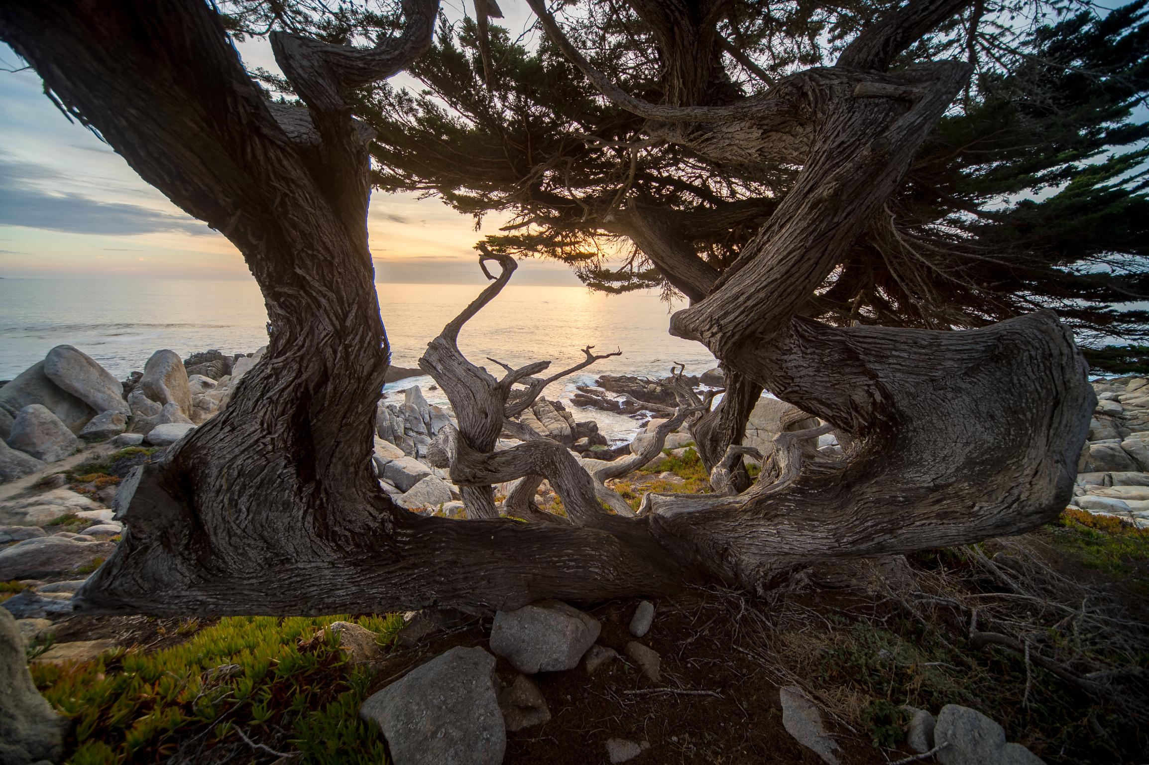 California Coast-107.jpg