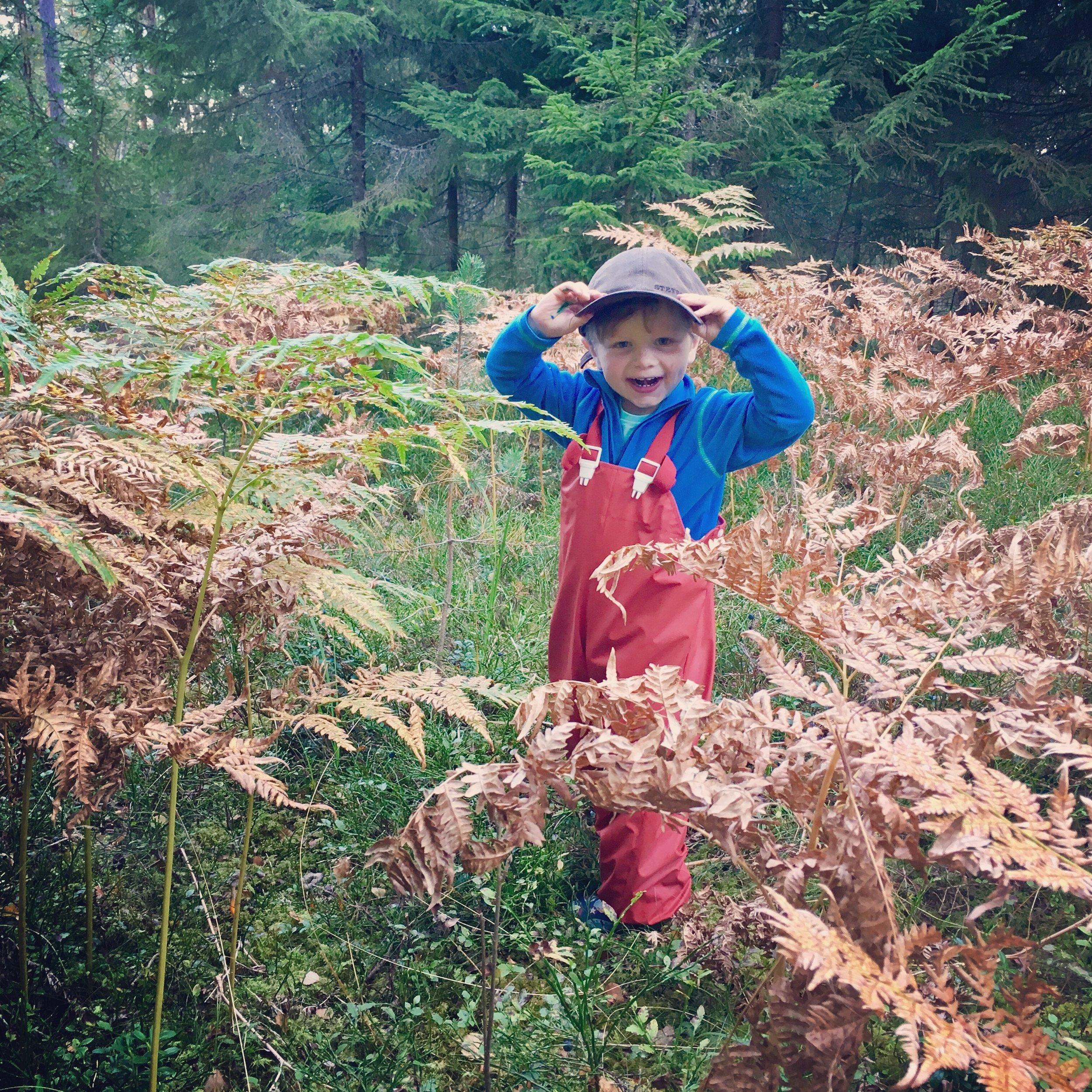 På väg till svampskogen