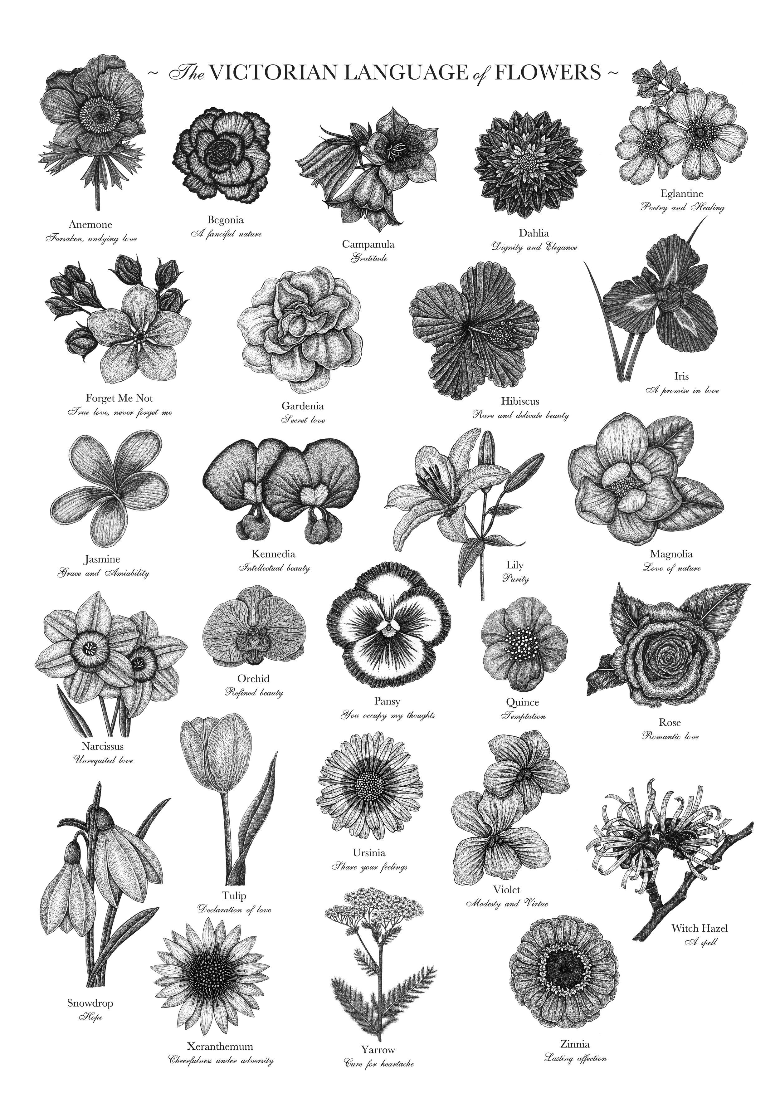 Language-of-Flowers.jpg