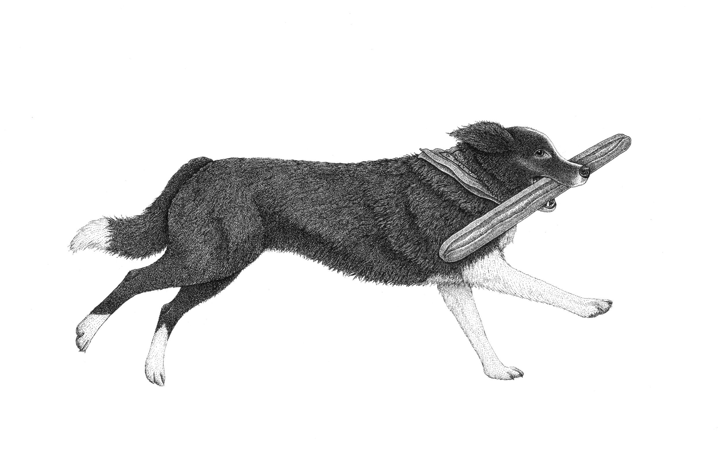 Nellie Illustration.jpg