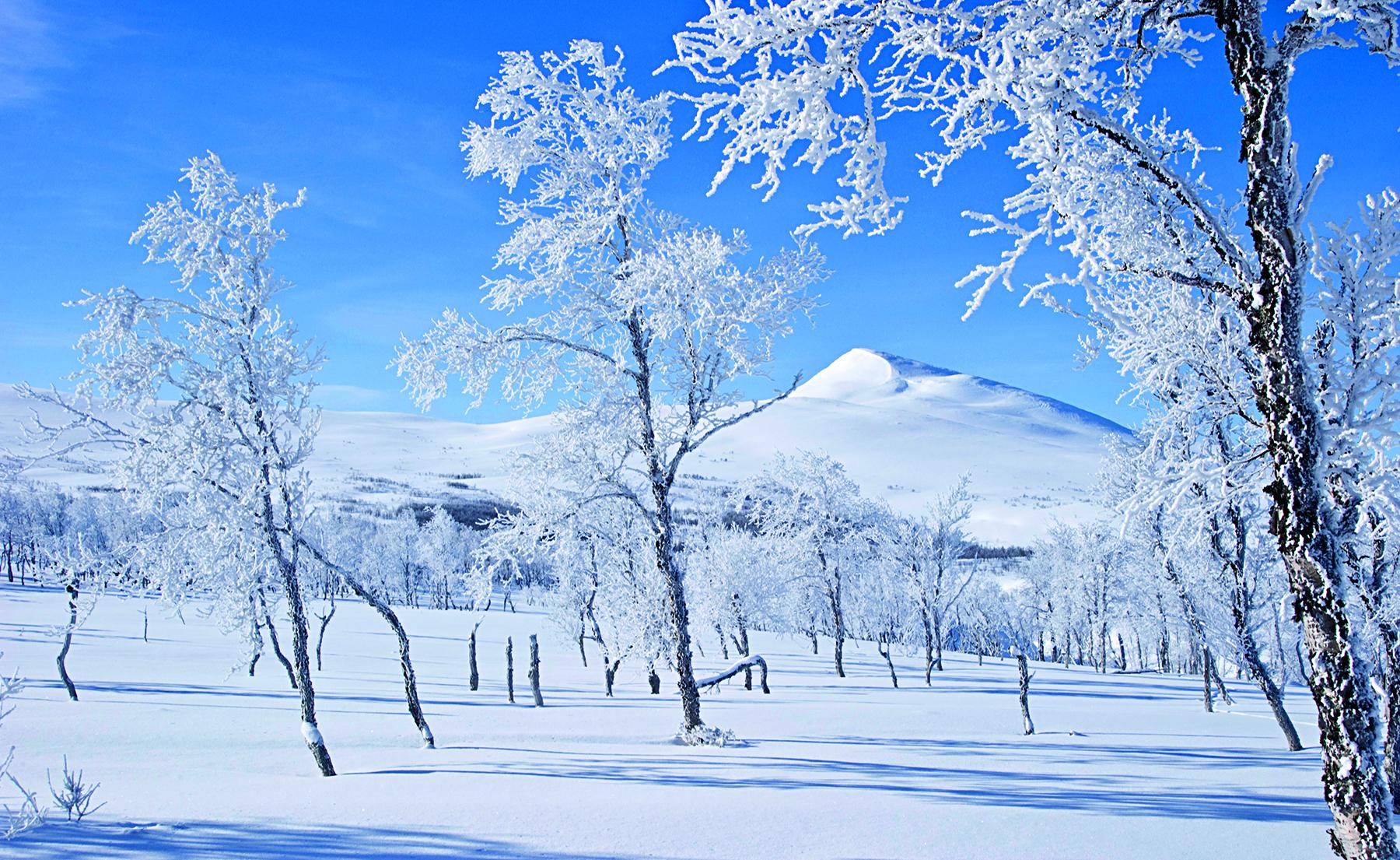 """""""Spring winter"""""""
