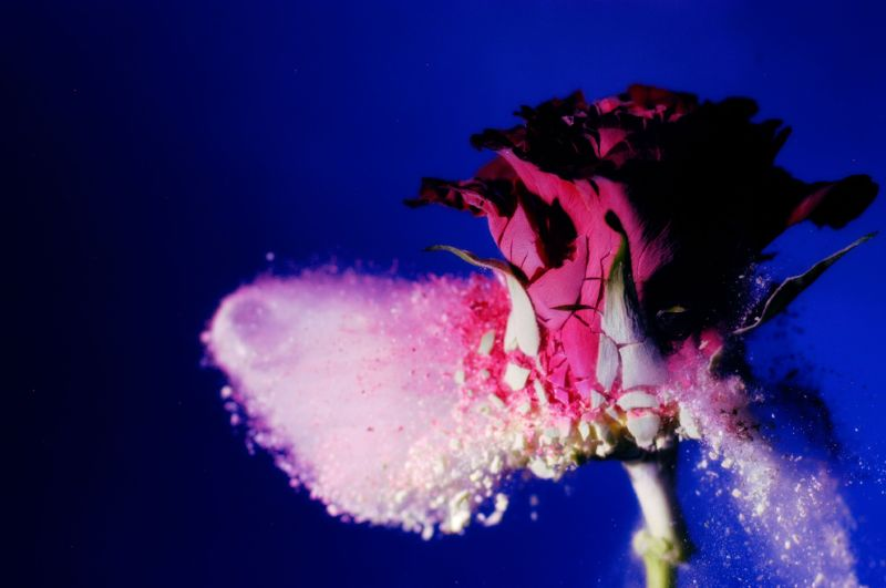 Bullet with Rose Petal Wings