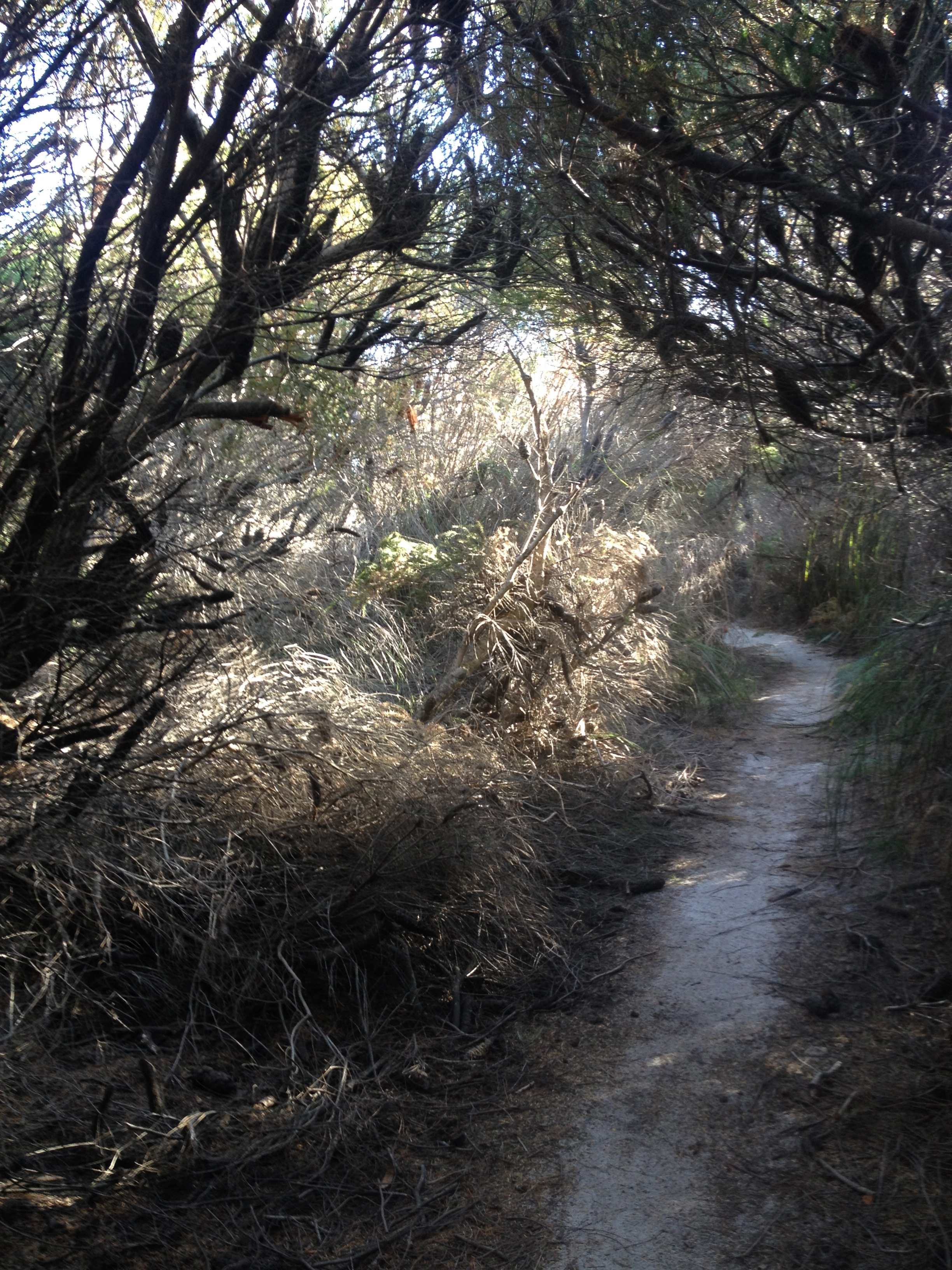 """""""Bush Walk""""                         Martyn Thompson"""