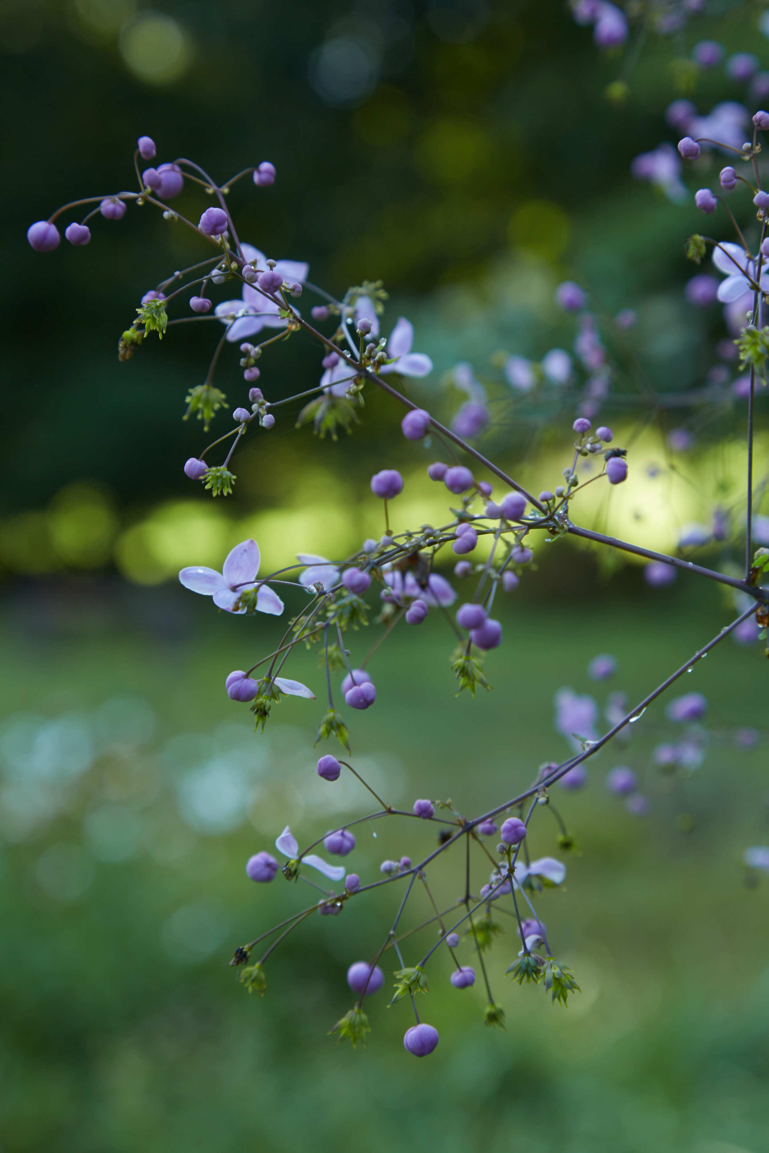 """""""Bloom""""  - Martyn Thompson"""