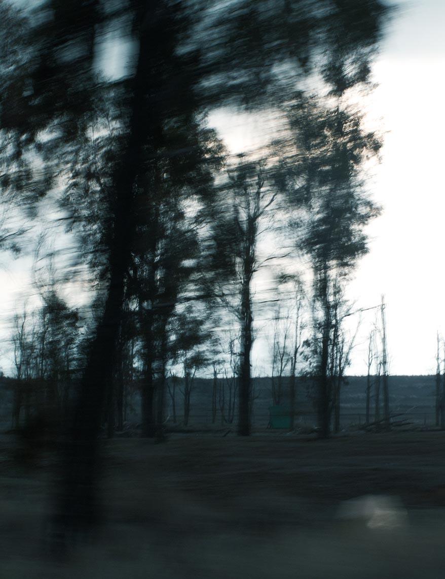 """  Trees #3""  -Martyn Thompson"