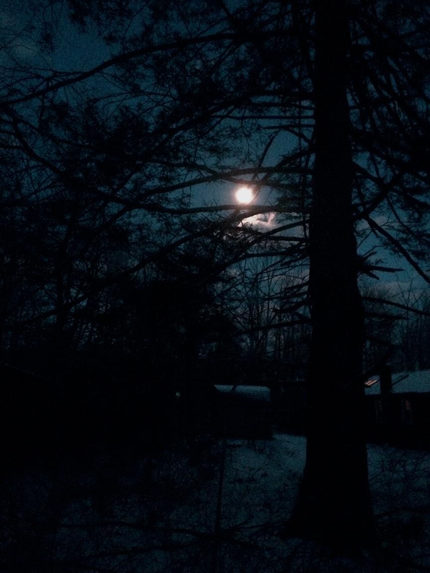 """""""Blue Moon"""" - Martyn Thompson"""