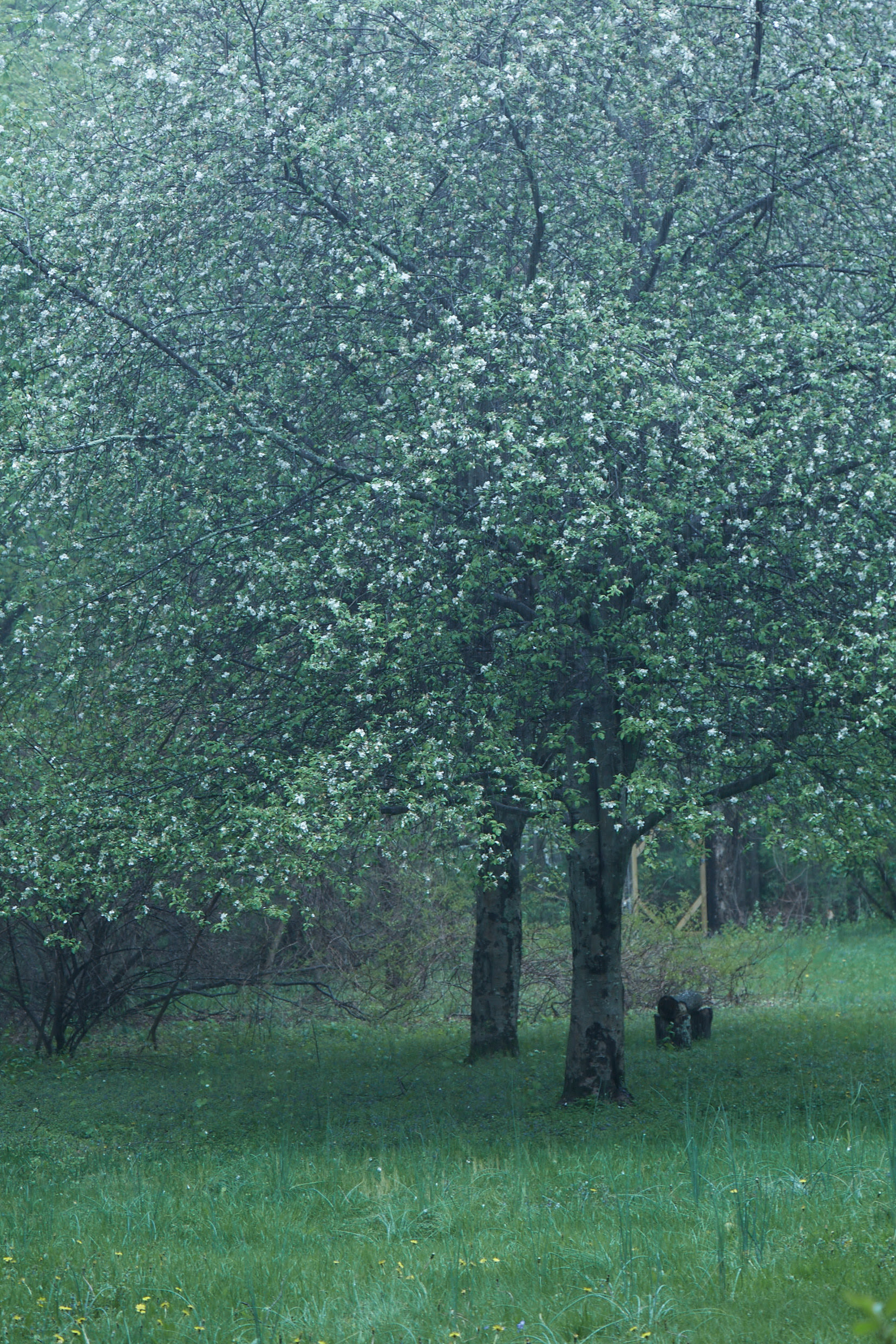 """""""Spring"""" - Martyn Thompson"""