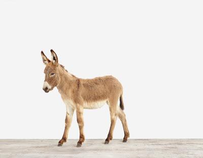 Baby-Donkey01_Baby+Animal+Photography+Prints.jpg