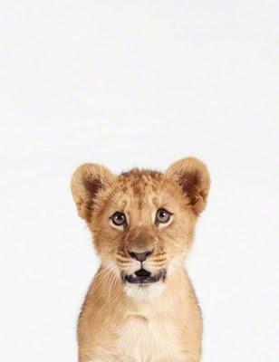 Lion-Cub-Art-For-Nursery.jpg