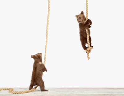 Baby-Animal-Photography-Pictures_Climbing-Bear-Cub.jpg